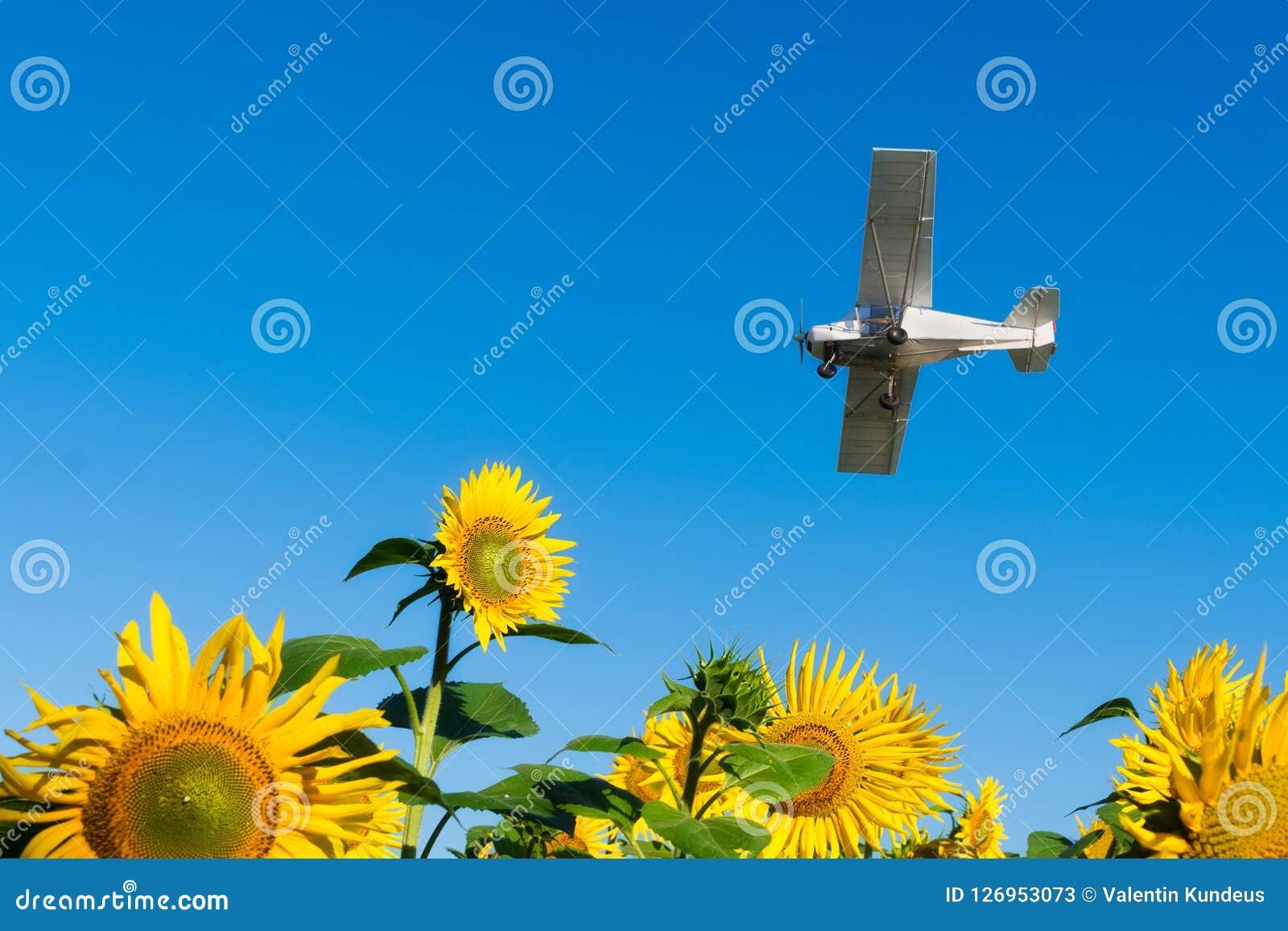 L avion vole au-dessus du champ des tournesols Usines de fertilisation Pulvérisation des pesticides de l air Les affaires agraire