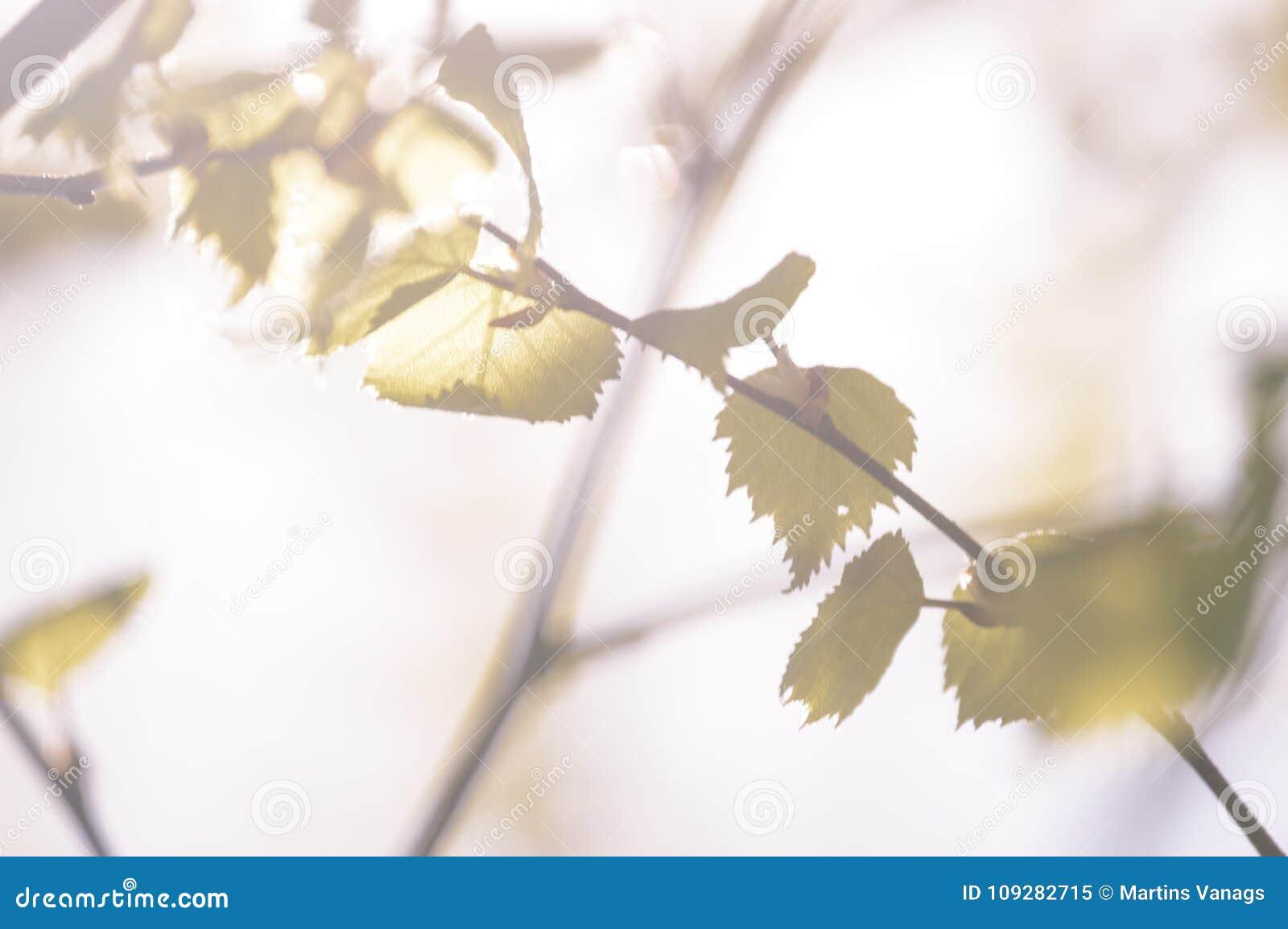 L or d automne coloré part dans la lumière du soleil lumineuse - vieux regard de vintage
