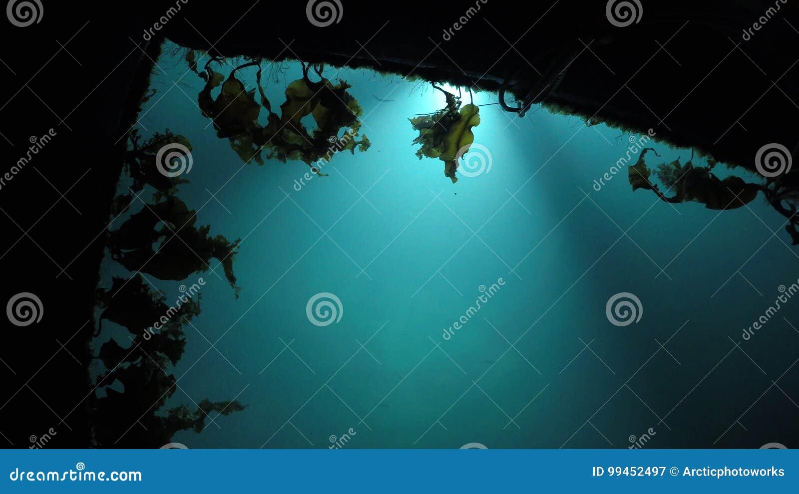 L\'eau De Marina De Lit Avec Déplacer Lentement L\'algue Brune Et La ...