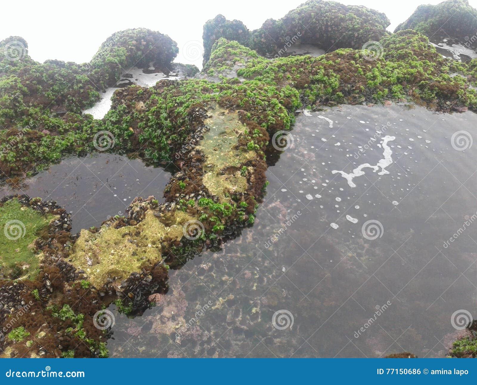 L eau de roche de poissons de plage de nature