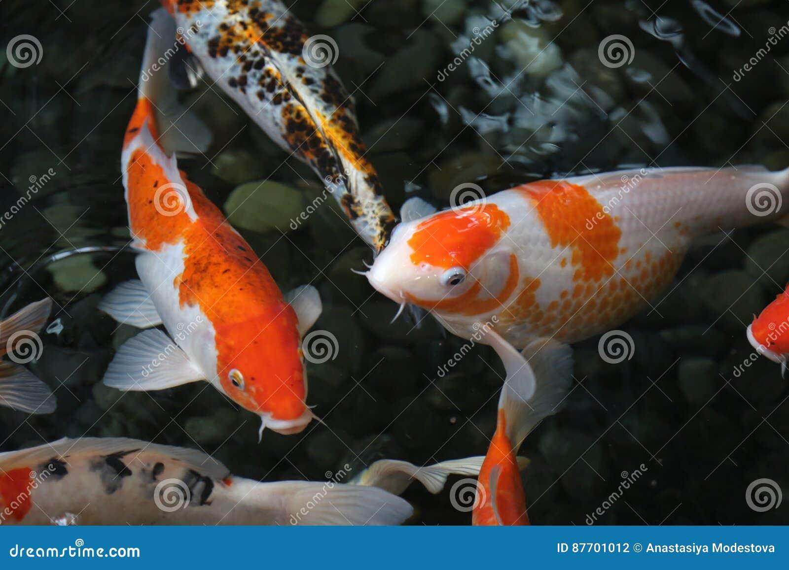 L eau orange d obscurité de poissons de groupe