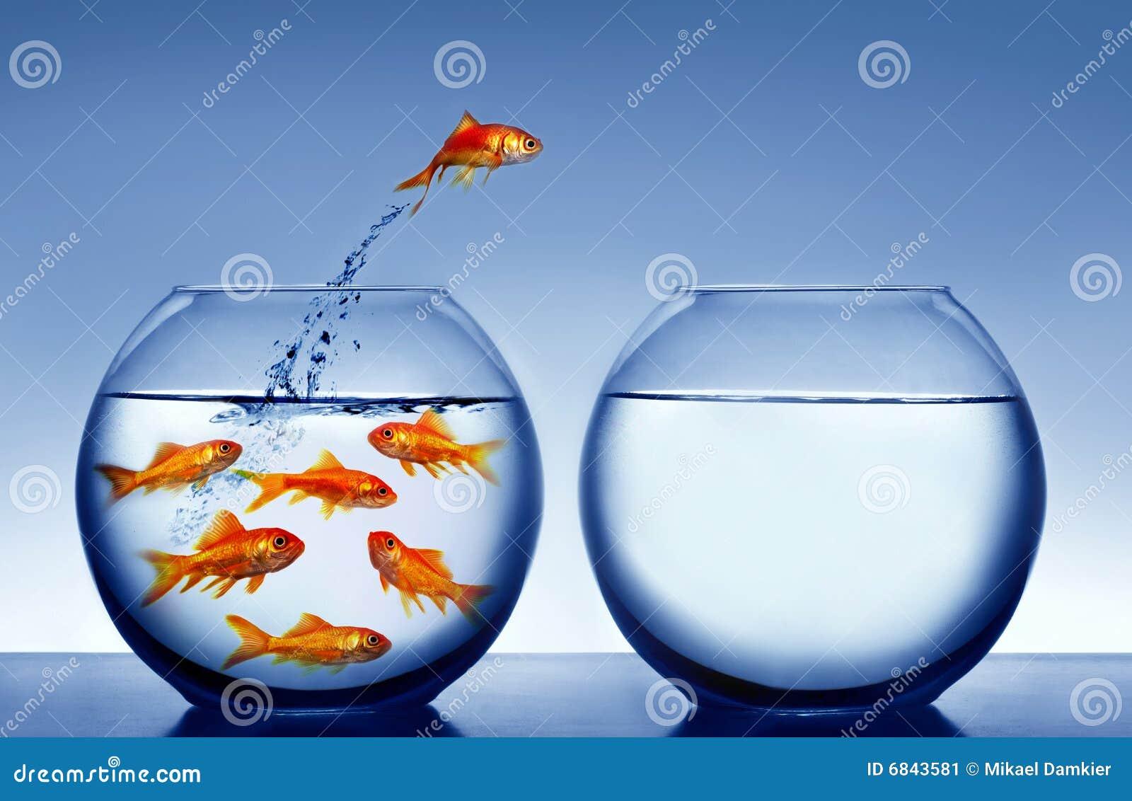 L eau sautante de goldfish