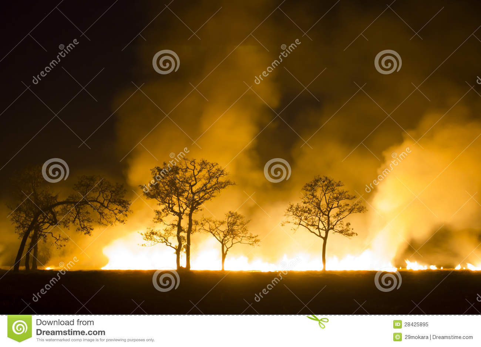 L ecosistema bruciante della foresta di incendio violento si distrugge