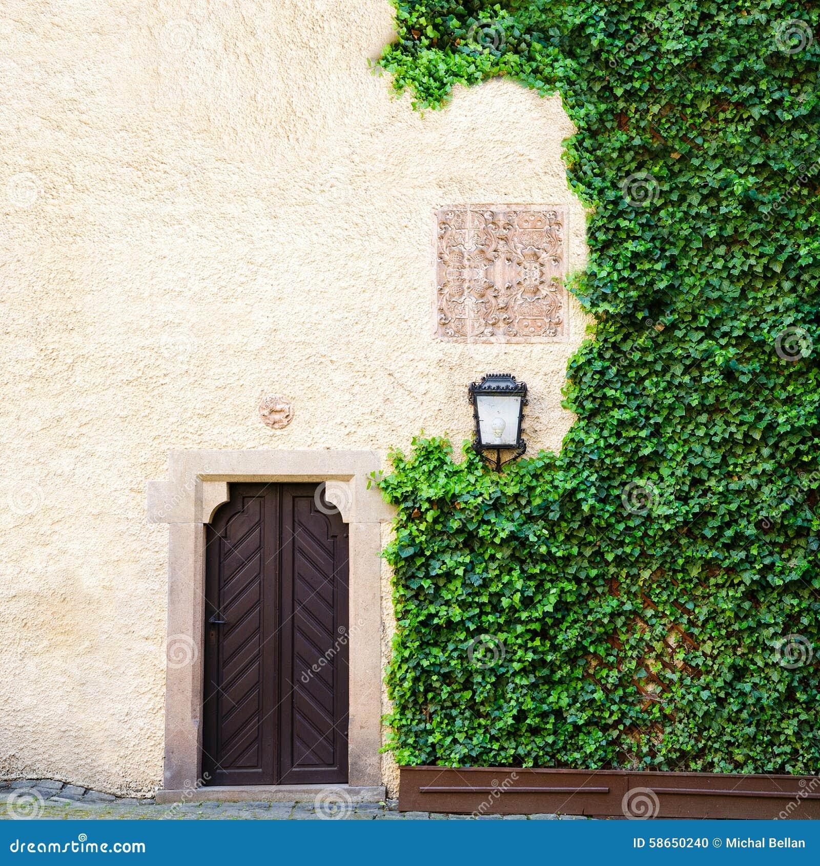 L edera verde riguarda il lato del fondo stagionato del granaio di vecchia porta
