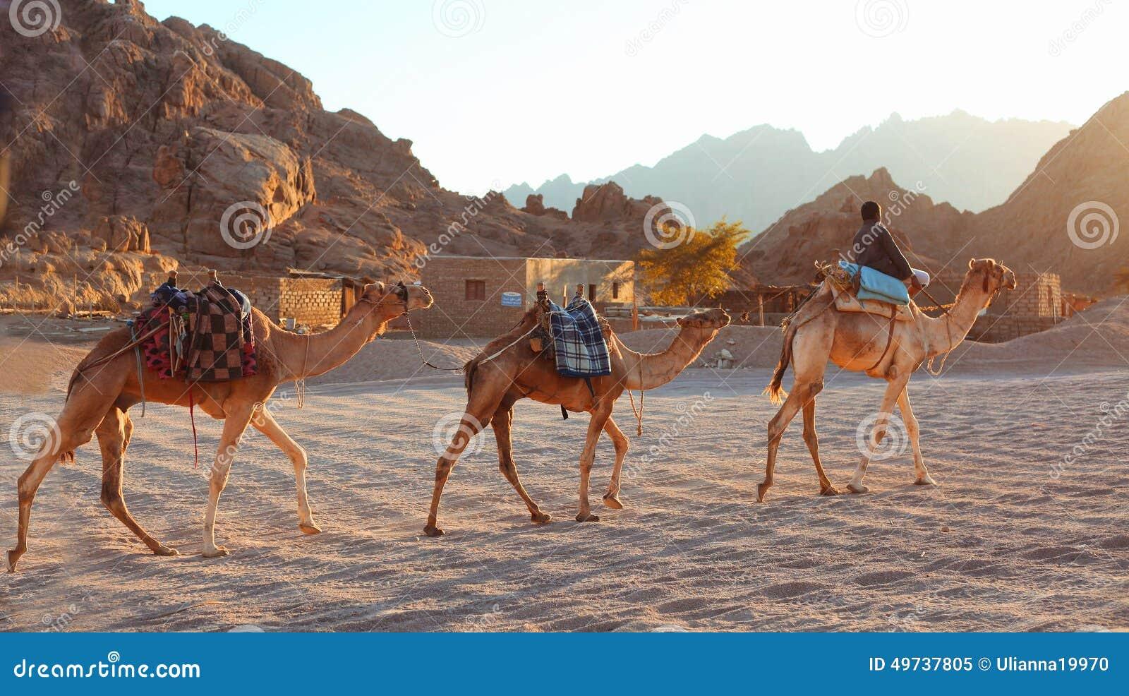 L EGITTO, SHARM EL-SHEIKH, IL 12 GENNAIO 2015: Il ragazzo egiziano conduce