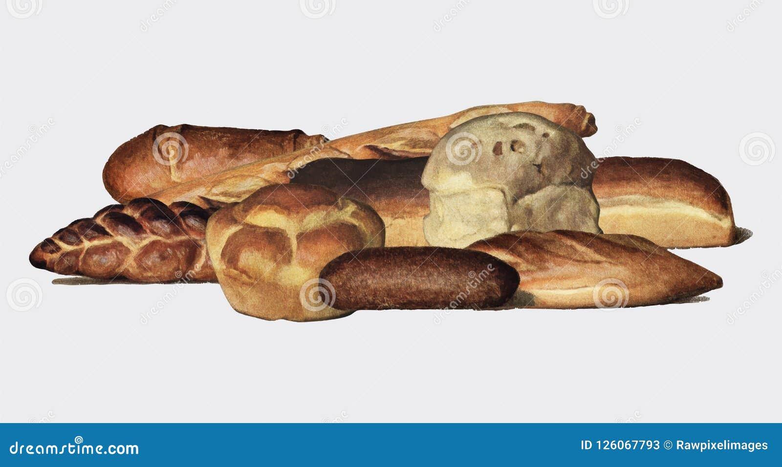 L enciclopedia 1911, una collezione d annata del ` s del droghiere di vari tipi di pagnotte al forno del pane Digital migliorata
