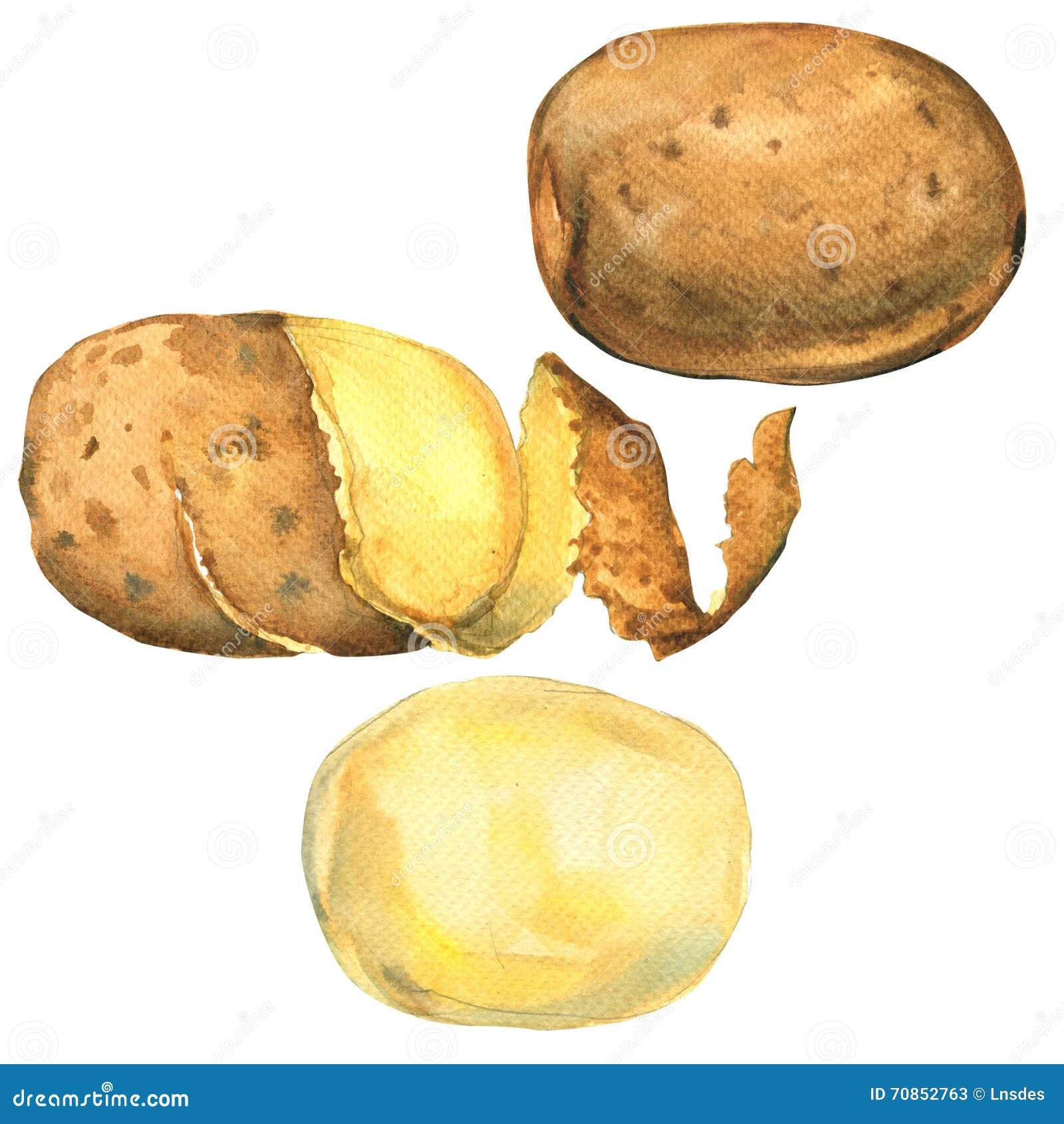 L ensemble de pommes de terre a épluché, en peau, isolé entier, illustration d aquarelle