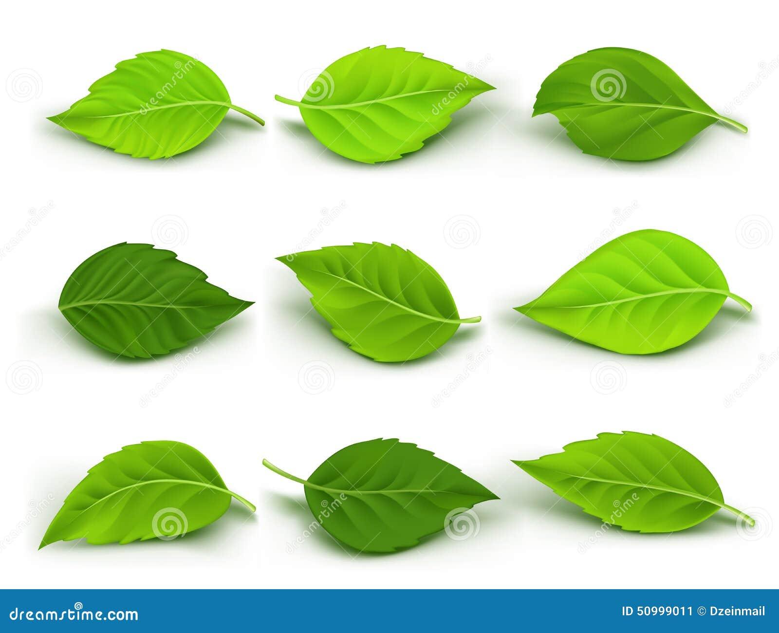 L ensemble de vert réaliste part de la collection
