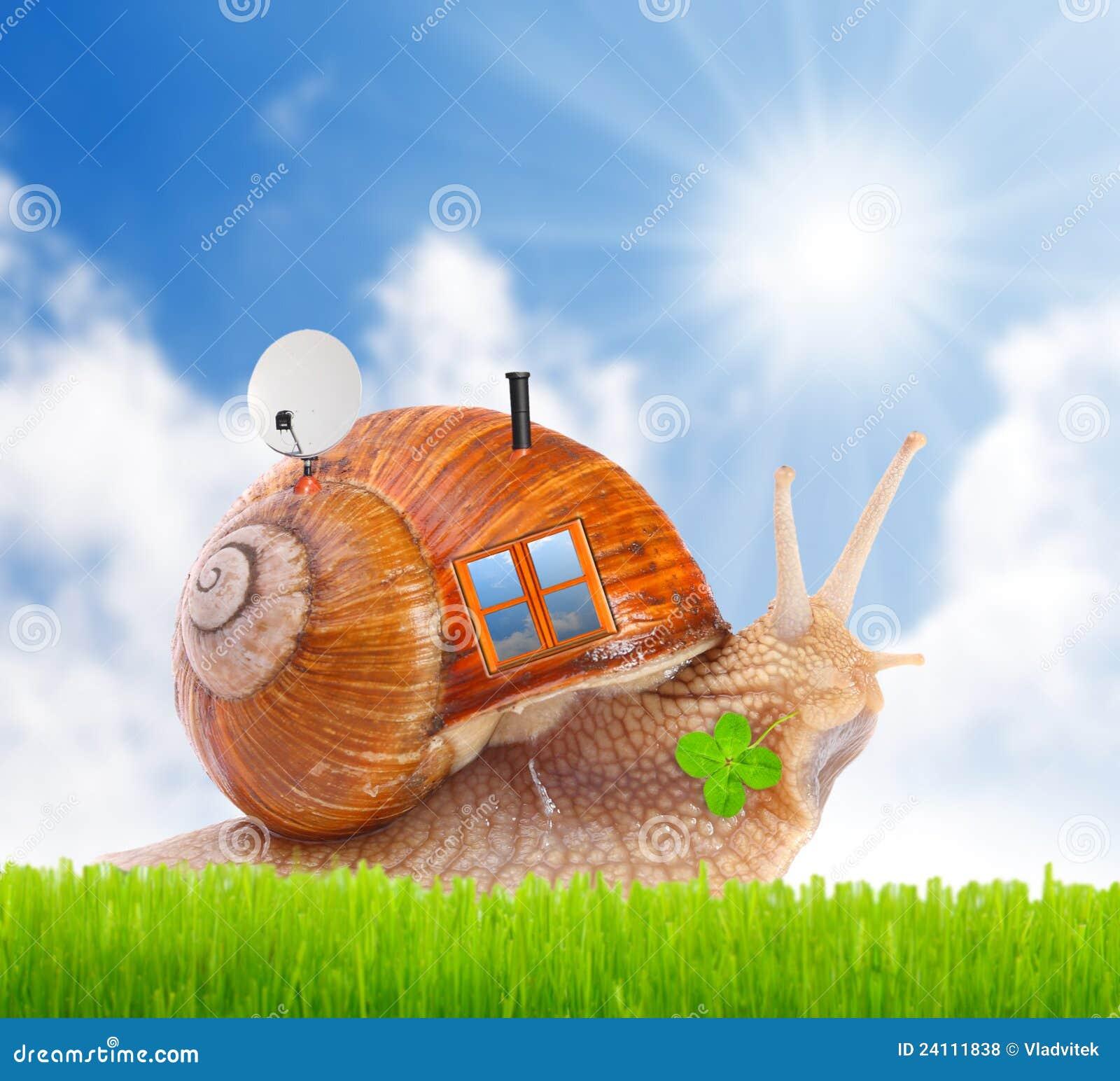 l escargot avec sa maison de mobil sur la route photos libres de droits image 24111838