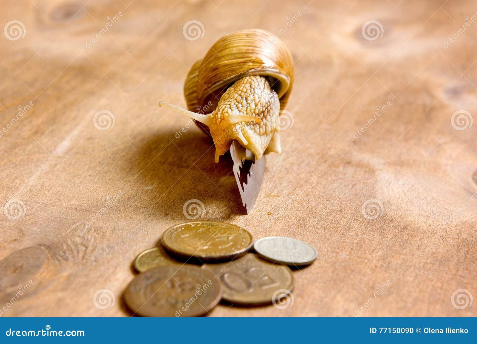 L escargot de jardin rampe d une lame aux pièces de monnaie