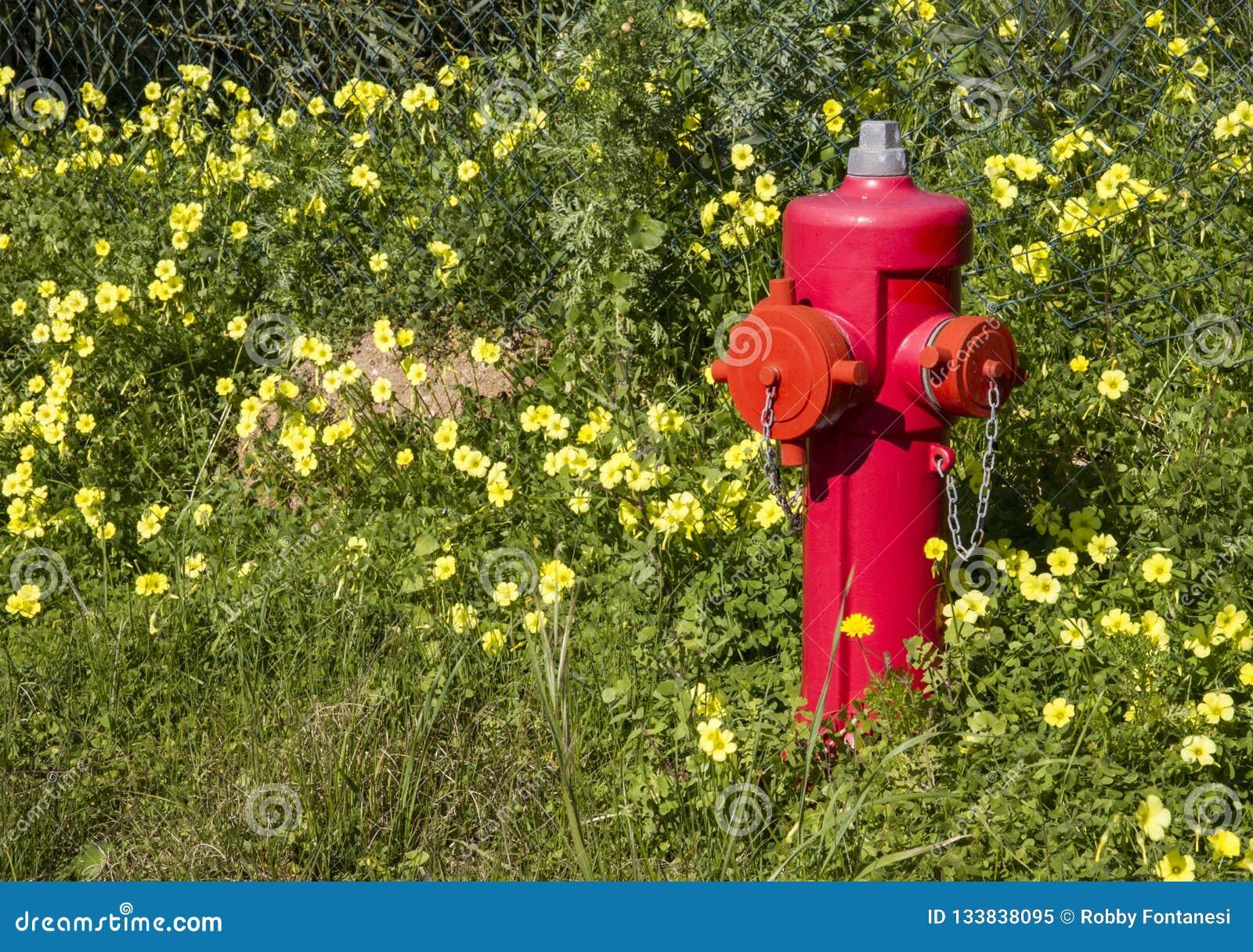 L extincteur rouge se tient parmi une pelouse verte avec beaucoup de