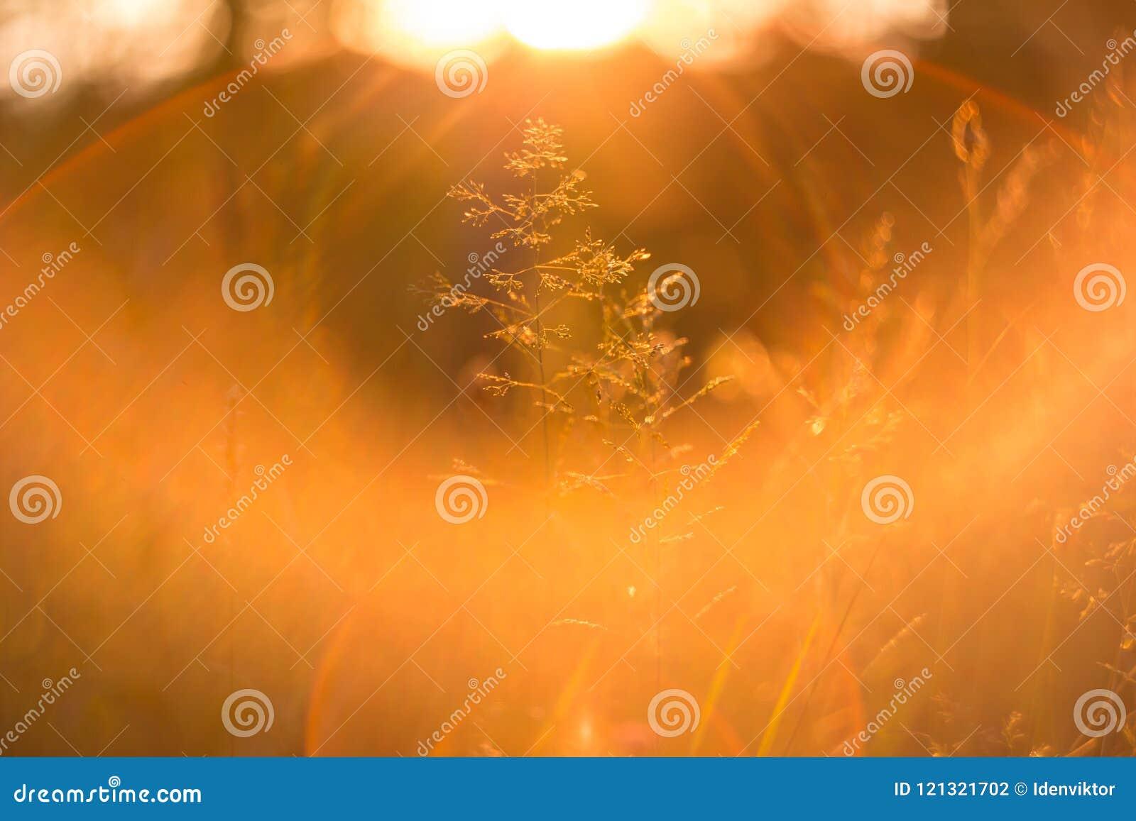L herbe de coucher du soleil sous la lumière du soleil douce et le soleil rayonne