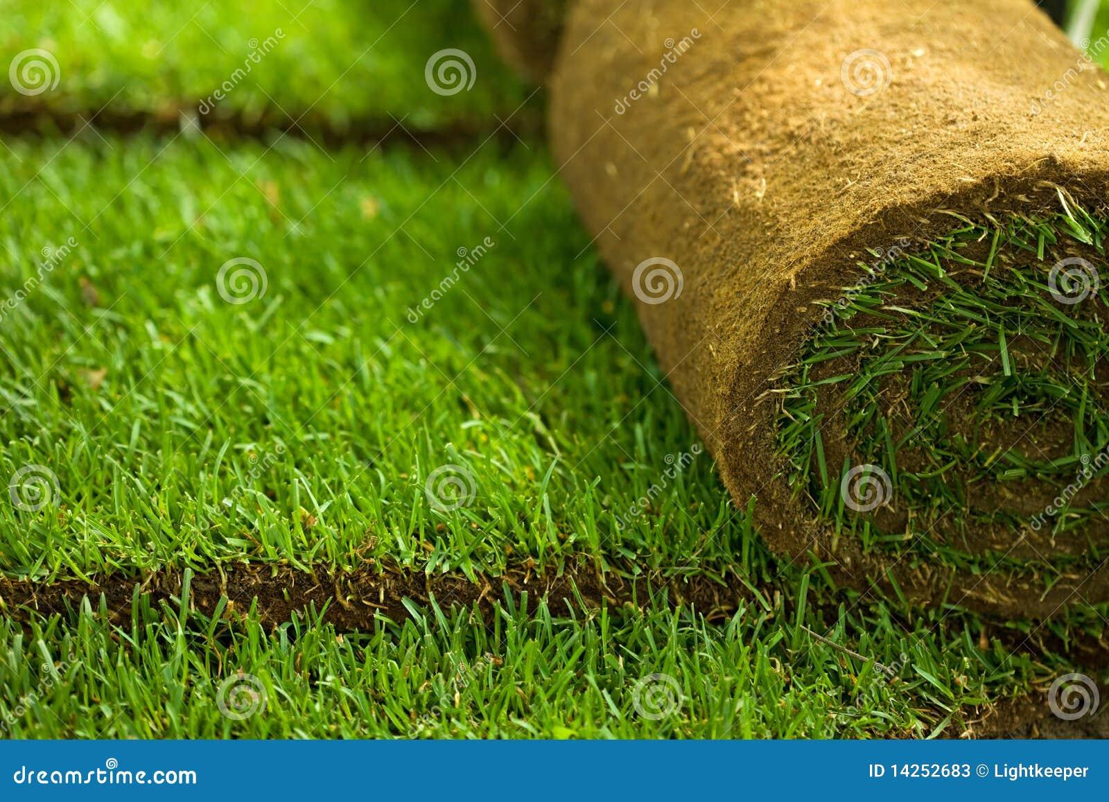L herbe de gazon roule le plan rapproché