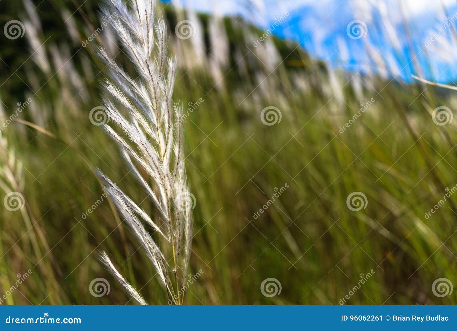 L herbe est beauté