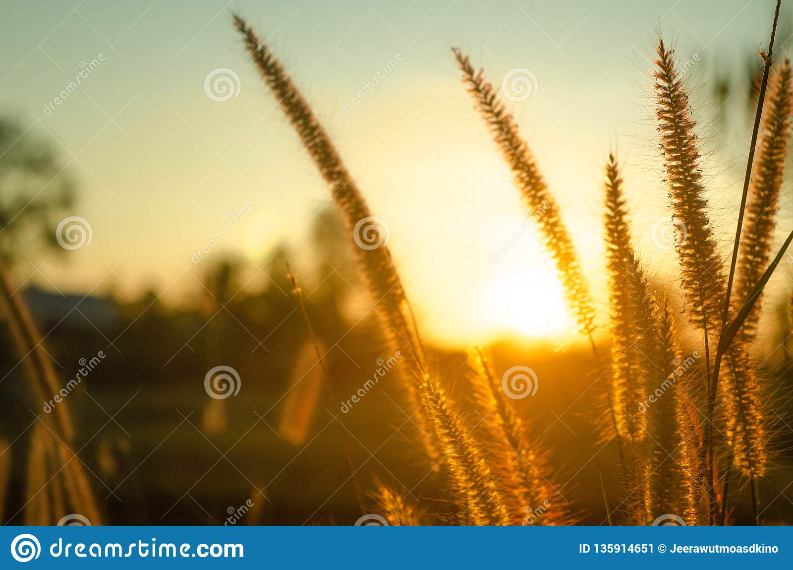 L herbe et le soleil tombent