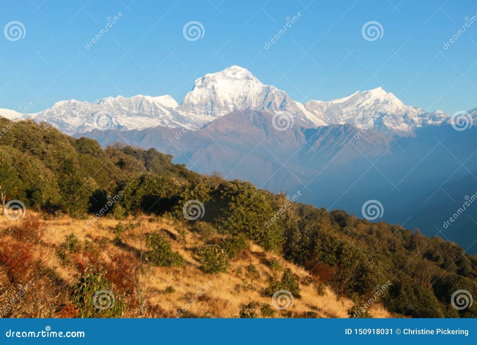 L Himalaya couronné de neige au Népal à l aube