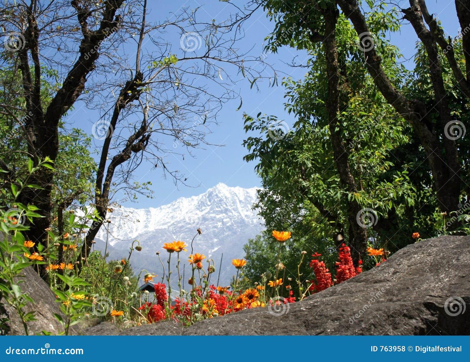 L Himalaya de Dharamsala et les fleurs oranges de fleurs