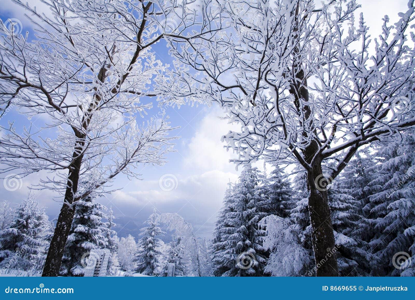 L hiver d horizontal