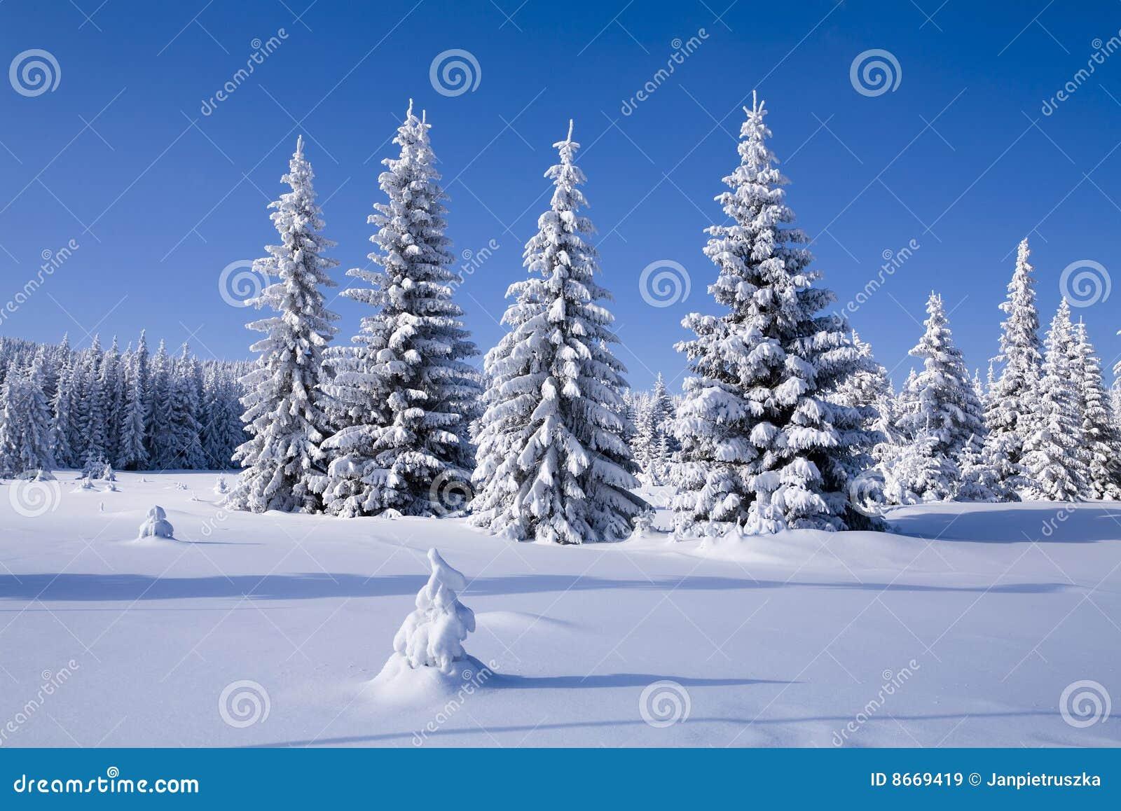 L hiver de forêt