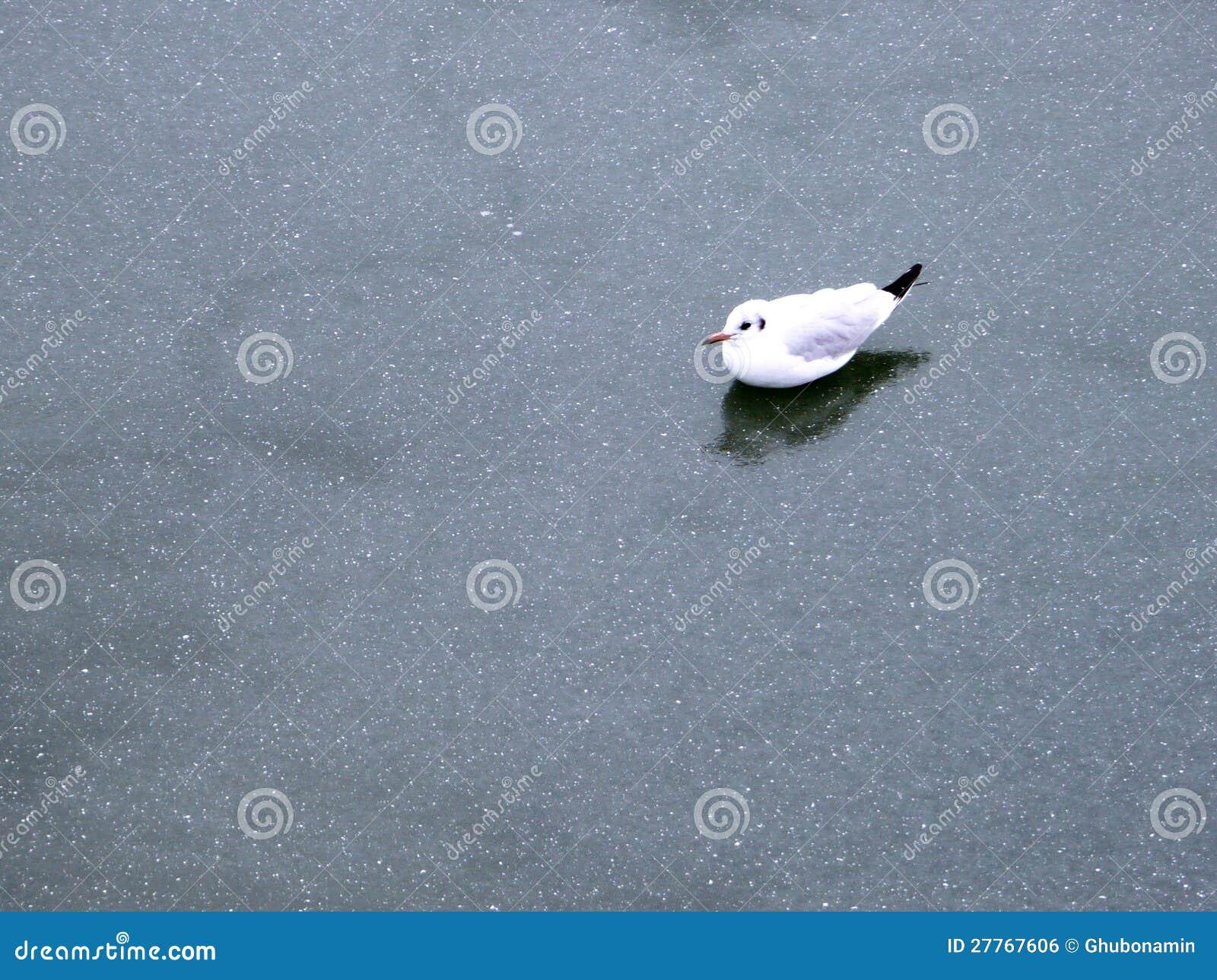 L hiver de mouette de glace