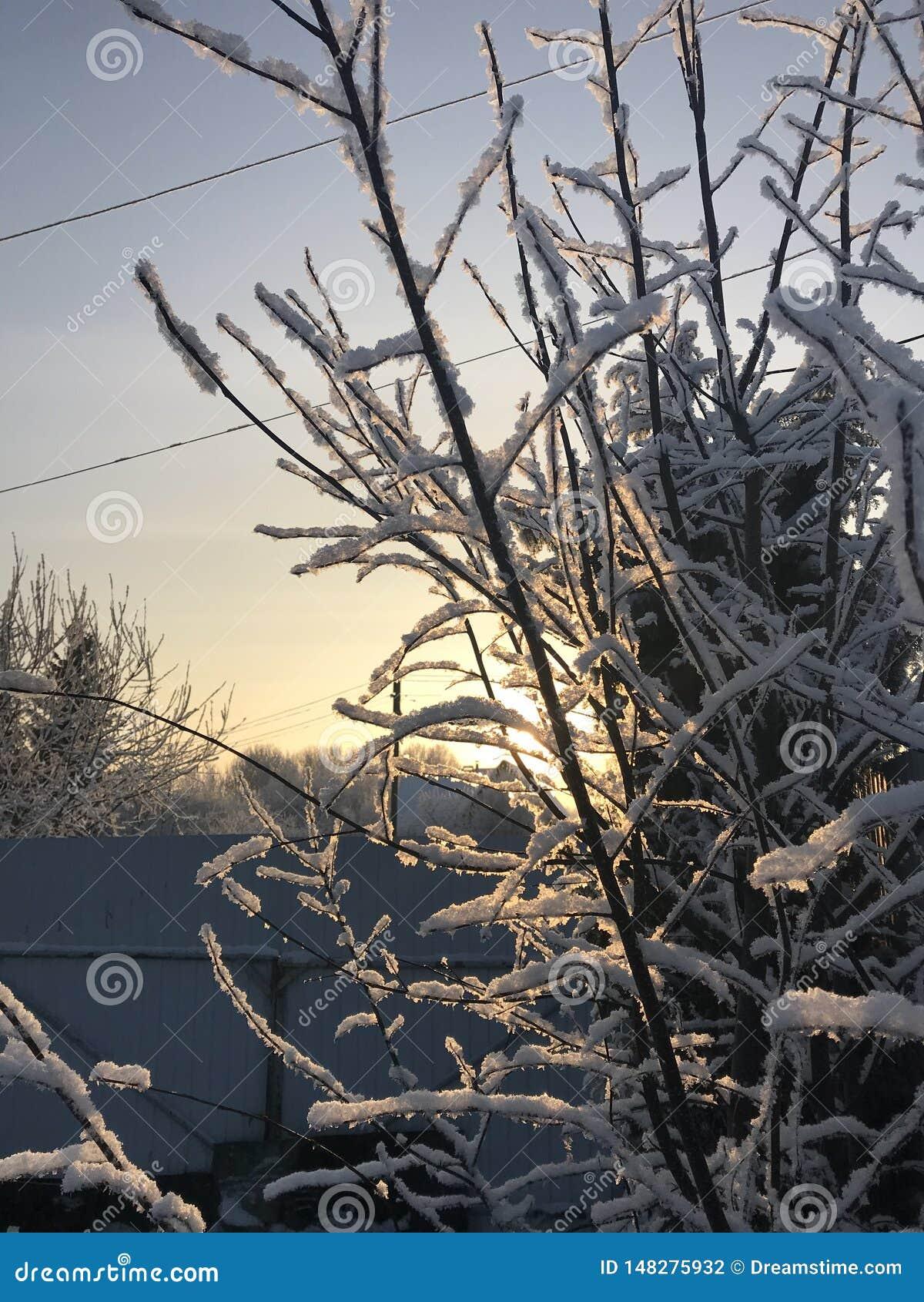 L hiver sont venus et les branches de zaprosili