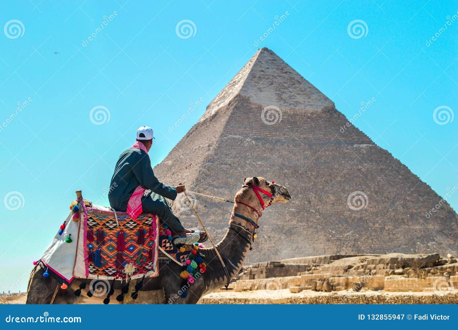 L homme mène un chameau aux pyramides de Gizeh