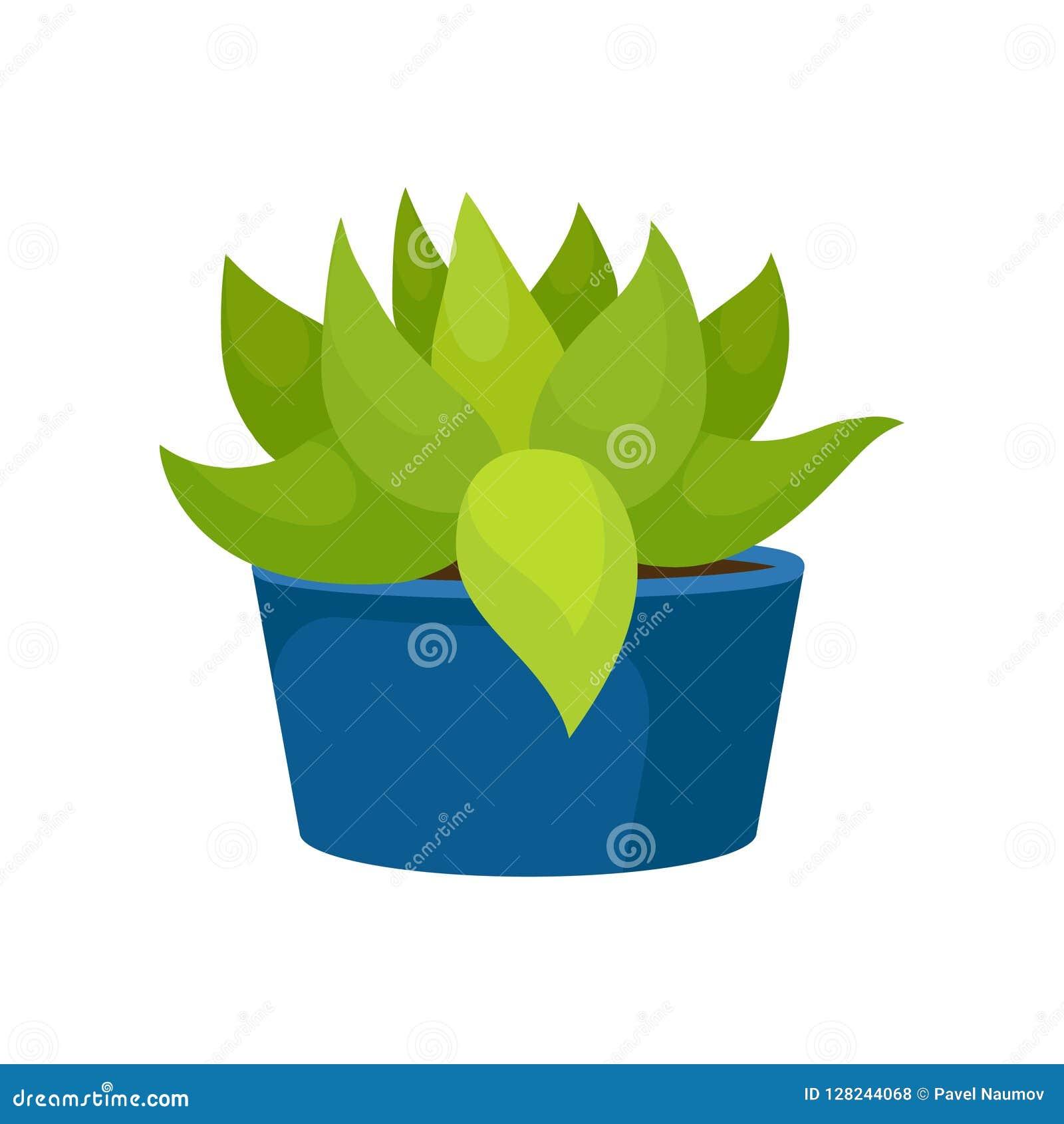 L icône plate de vecteur du cactus avec le vert part dans le pot en céramique bleu Usine succulente Élément à la maison naturel d
