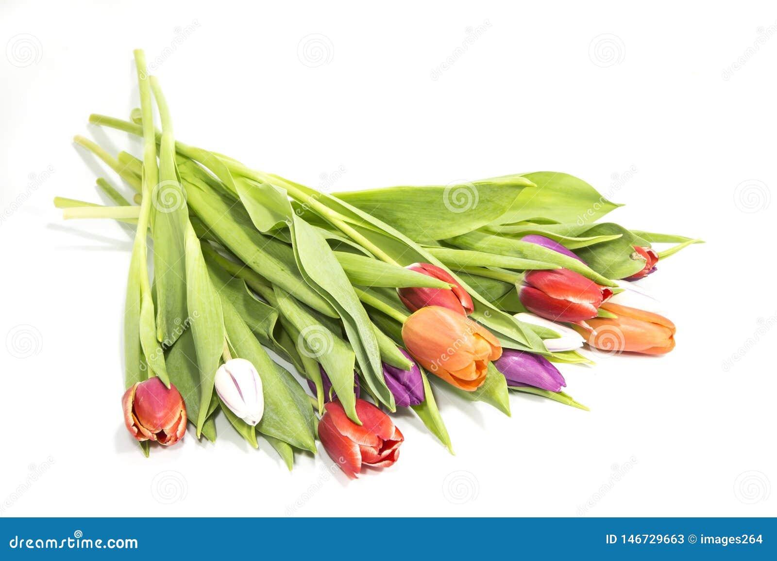 L illustration de couleur de bouquet simulent l eau de vecteur de tulipes