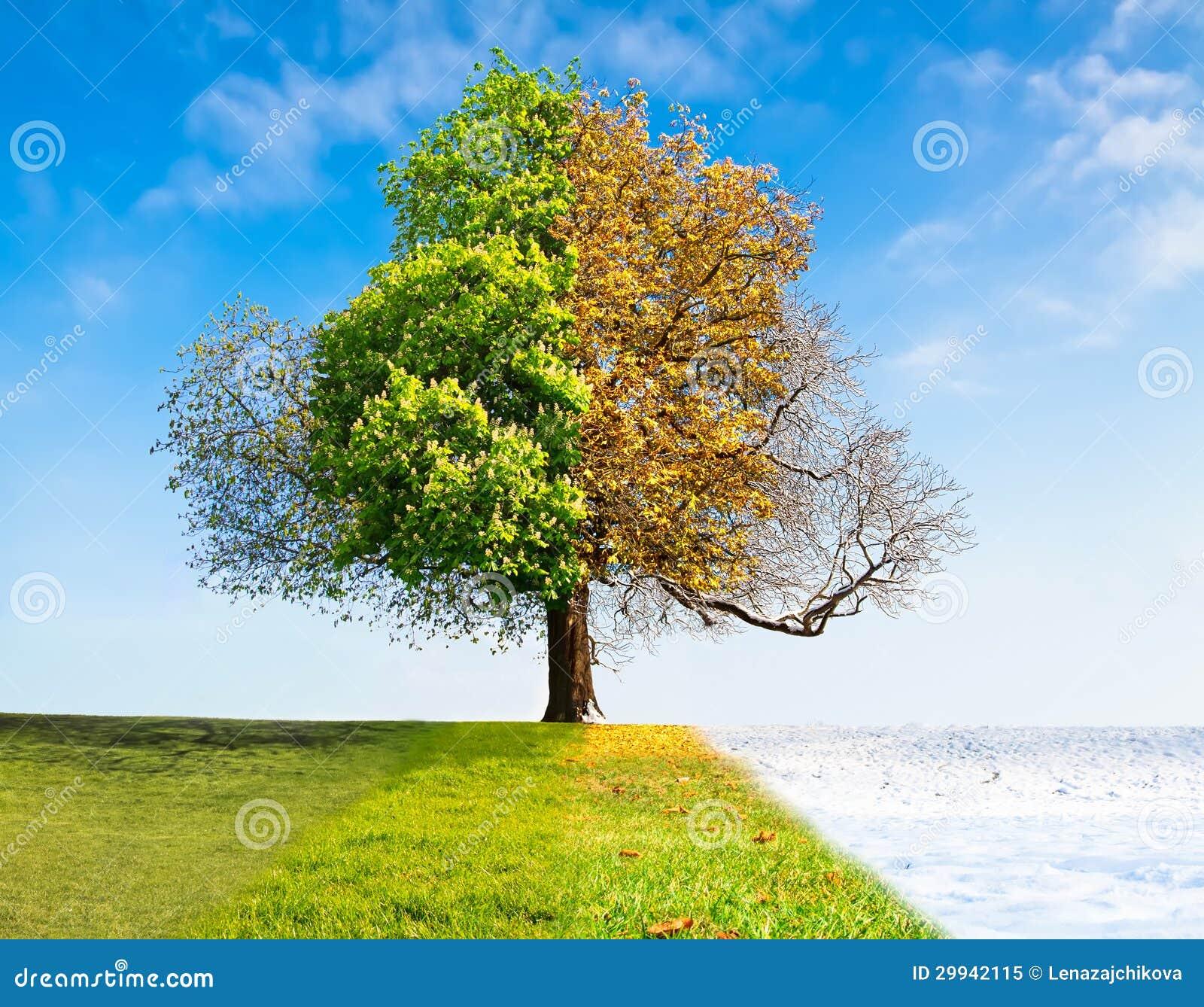 Arbre de quatre saisons photo libre de droits image 29942115 - Printemps ete automne hiver et printemps ...