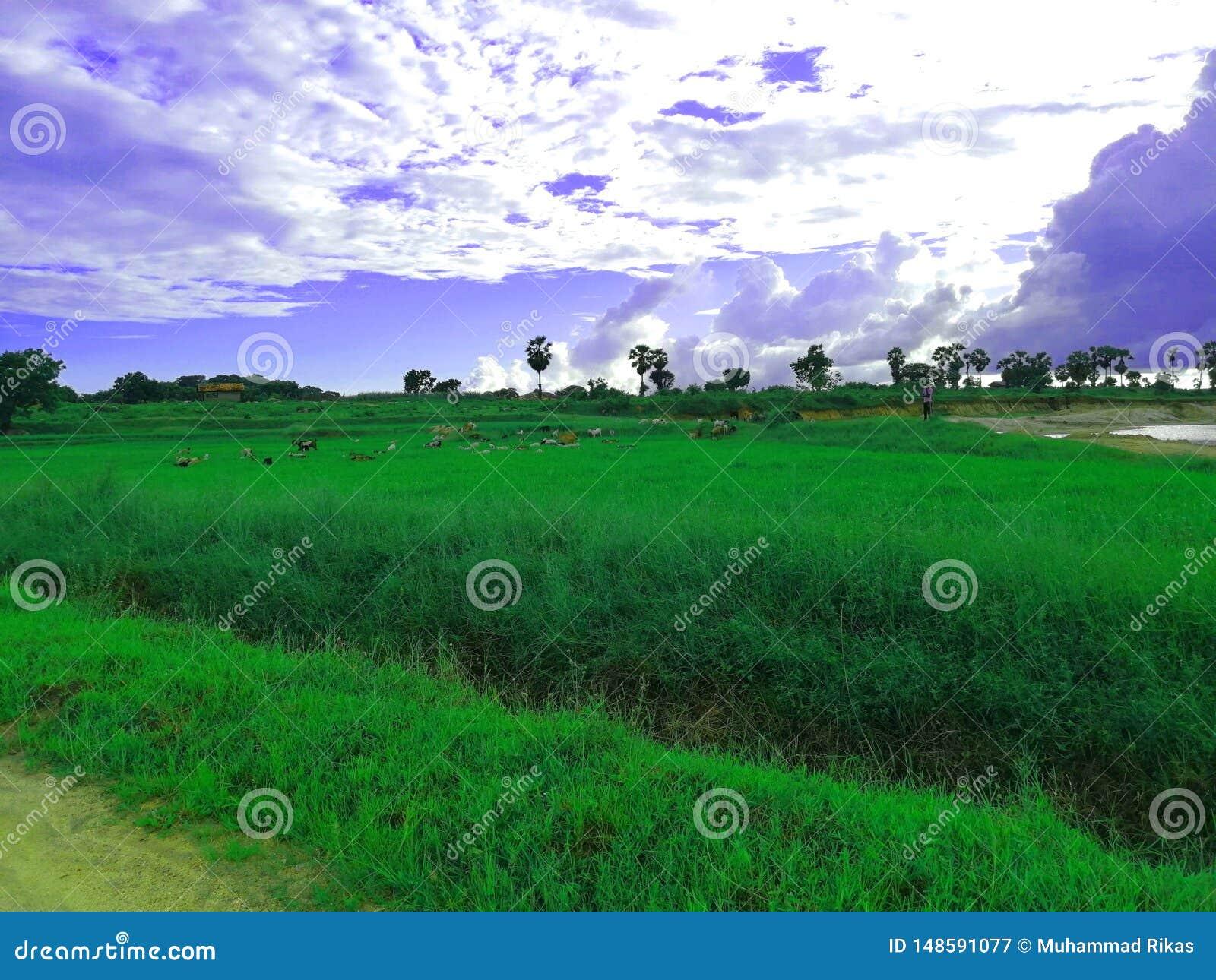 L image impressionnante de la rizière