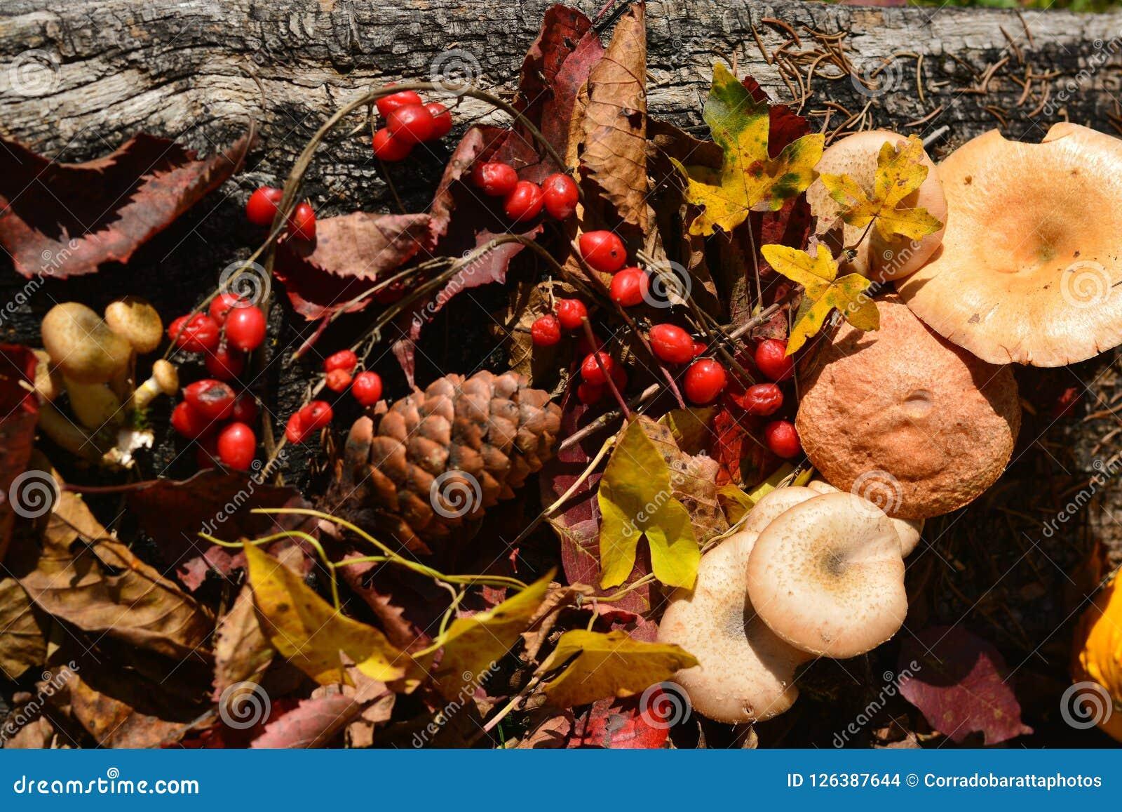 L imagination de couleurs d automne voient la saison la plus belle de l année