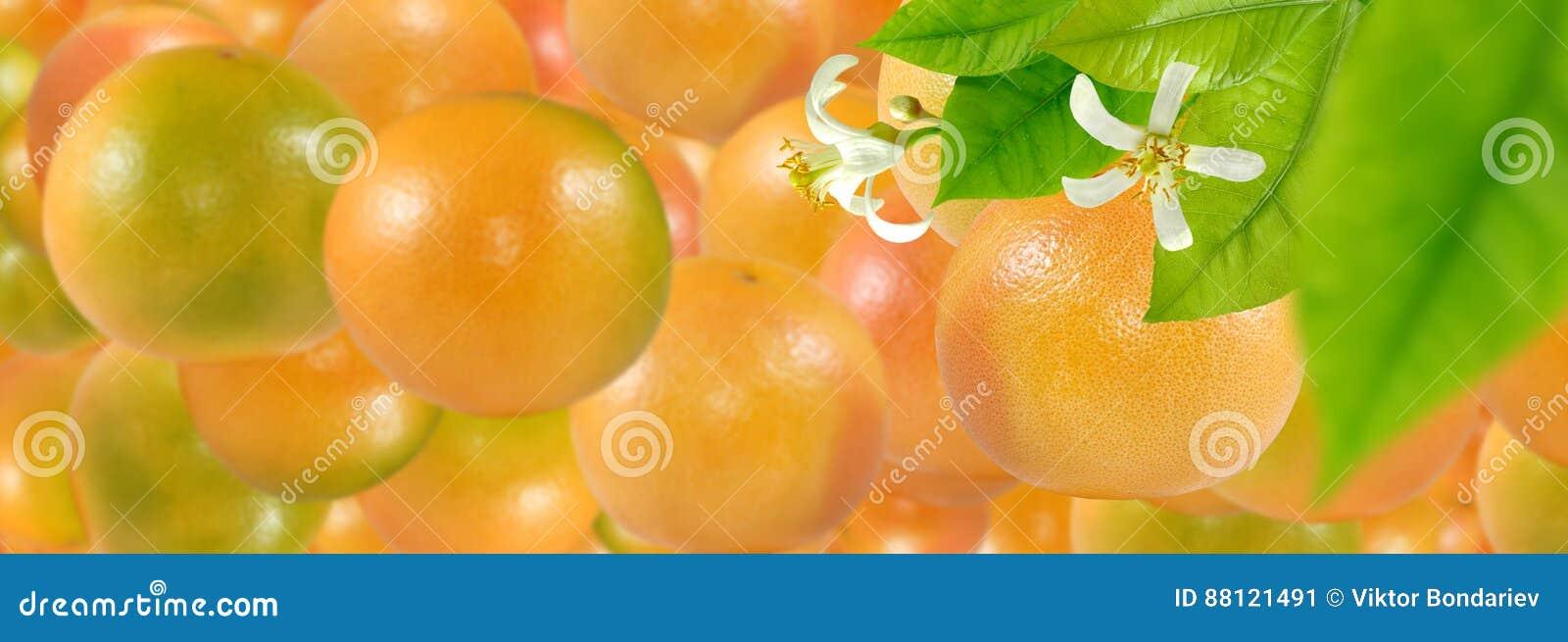 L immagine di molte arance mature deliziose si chiude su
