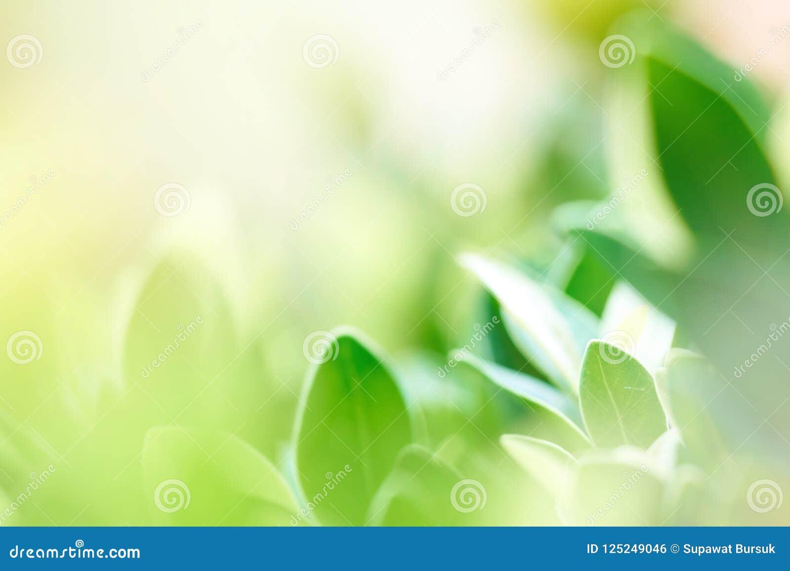 L immagine di sfondo è foglie verdi confuse che ritengono rinfrescate a