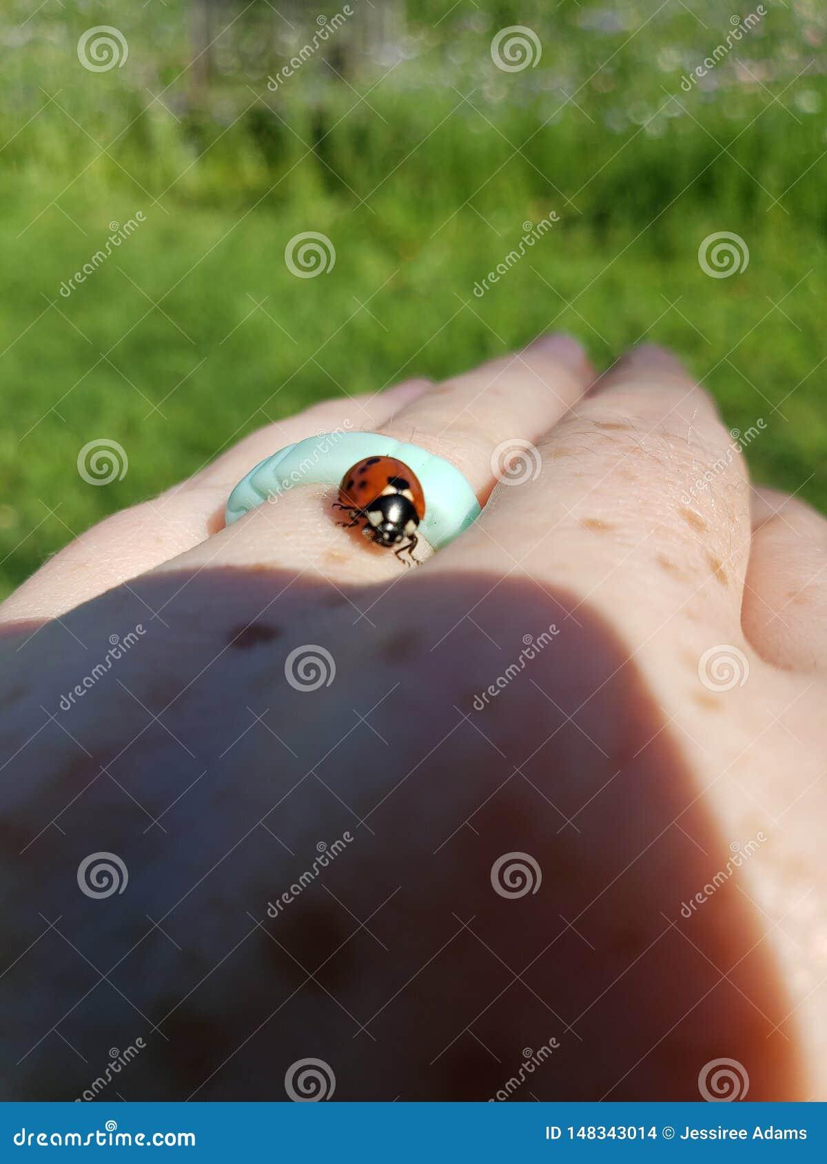L insecte de Madame rampe en main