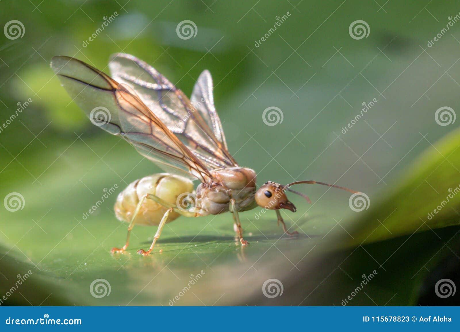 L insetto è sul fiore in giardino