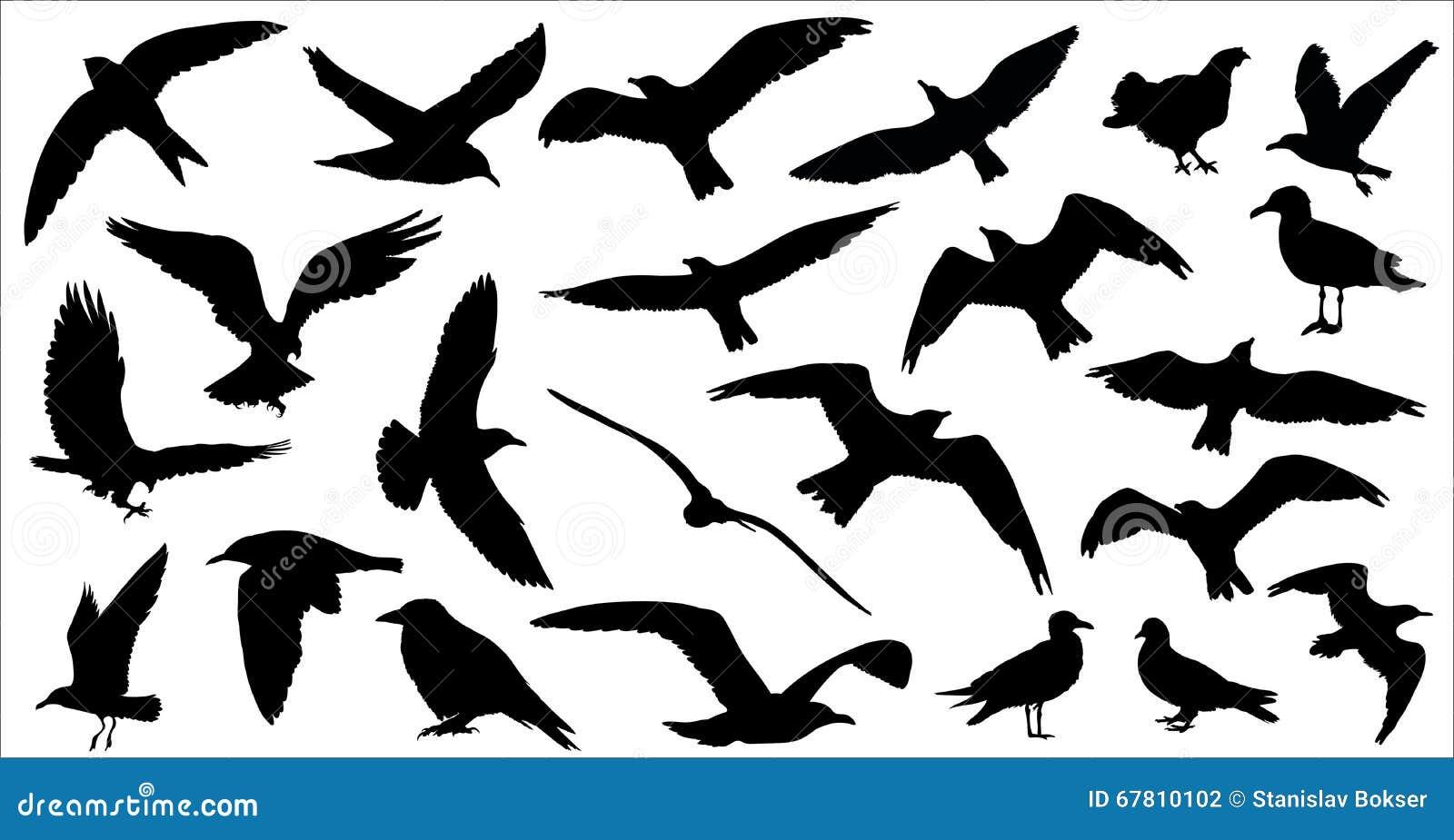 L insieme degli uccelli profila 23 in 1 su fondo bianco