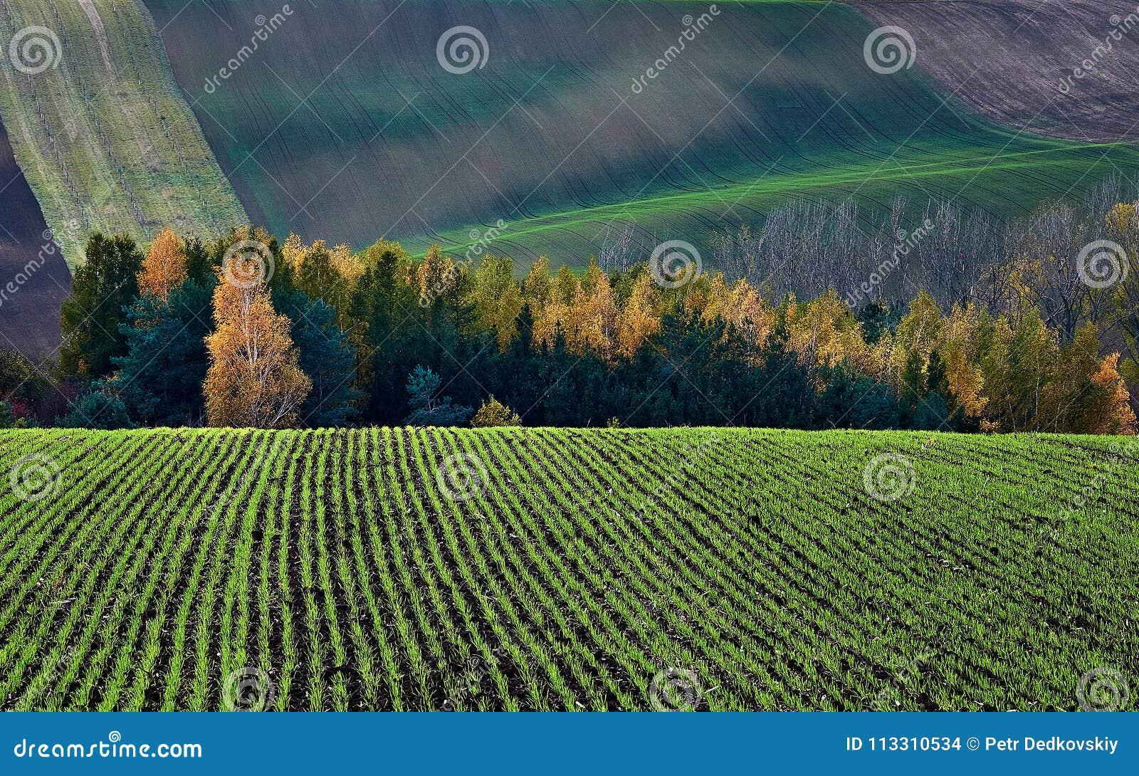 L inverno pota nel contesto del cespuglio e delle colline di autunno La Moravia del sud Repubblica ceca