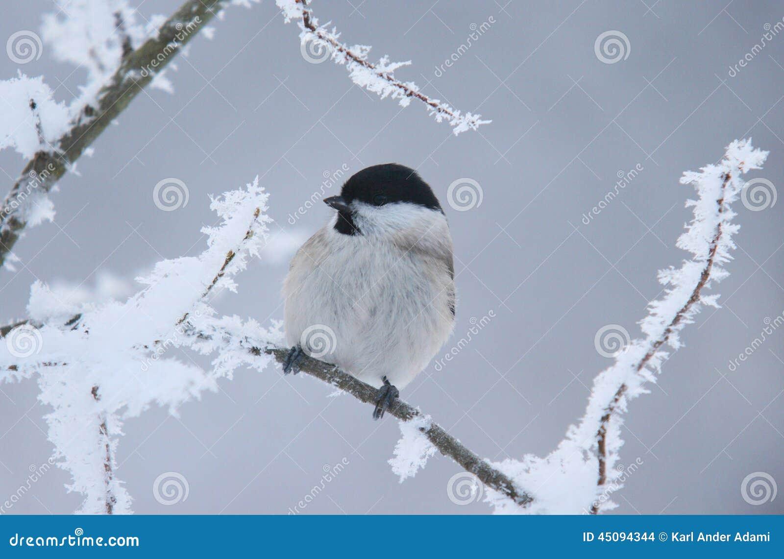 L inverno sta venendo