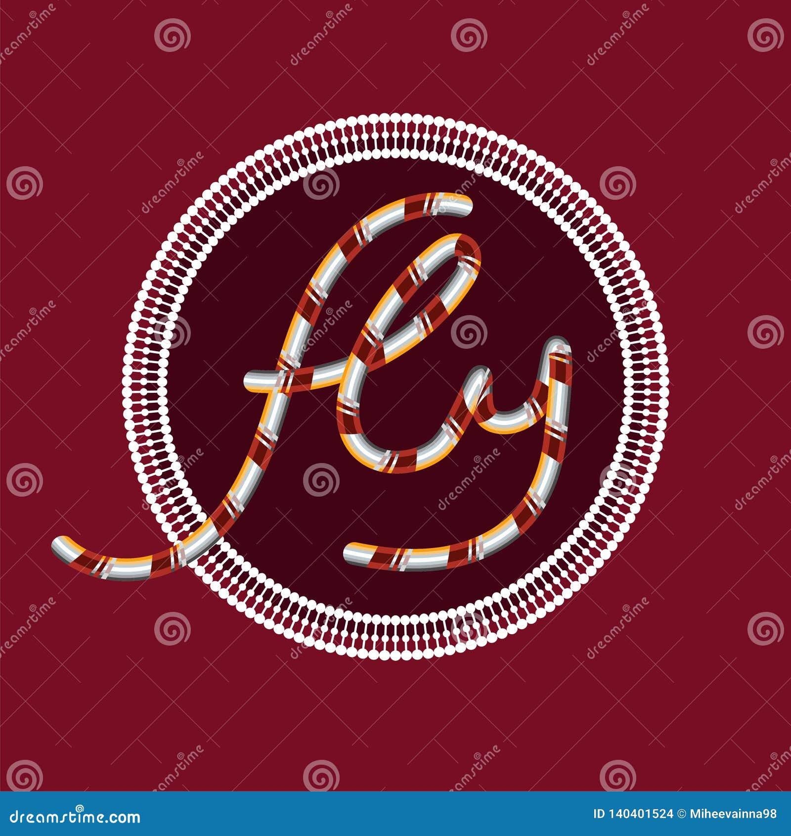 """L iscrizione """"mosca """"su un fondo di Borgogna in un cerchio con gli ornamenti"""