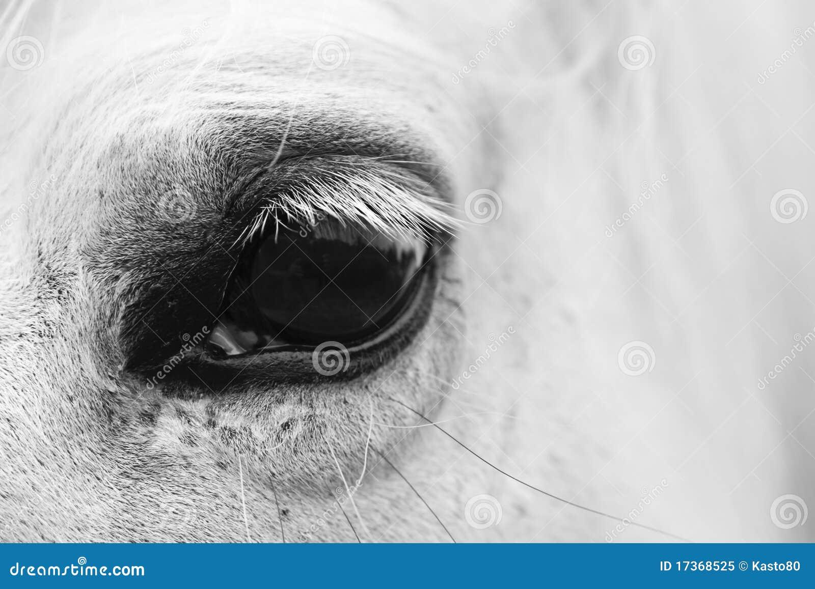 L oeil de cheval blanc - verticale noire et blanche d art