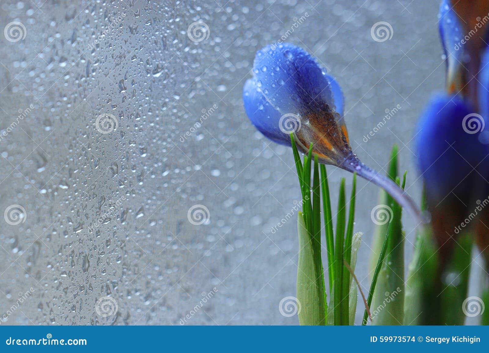 L offre les fleurs dspring