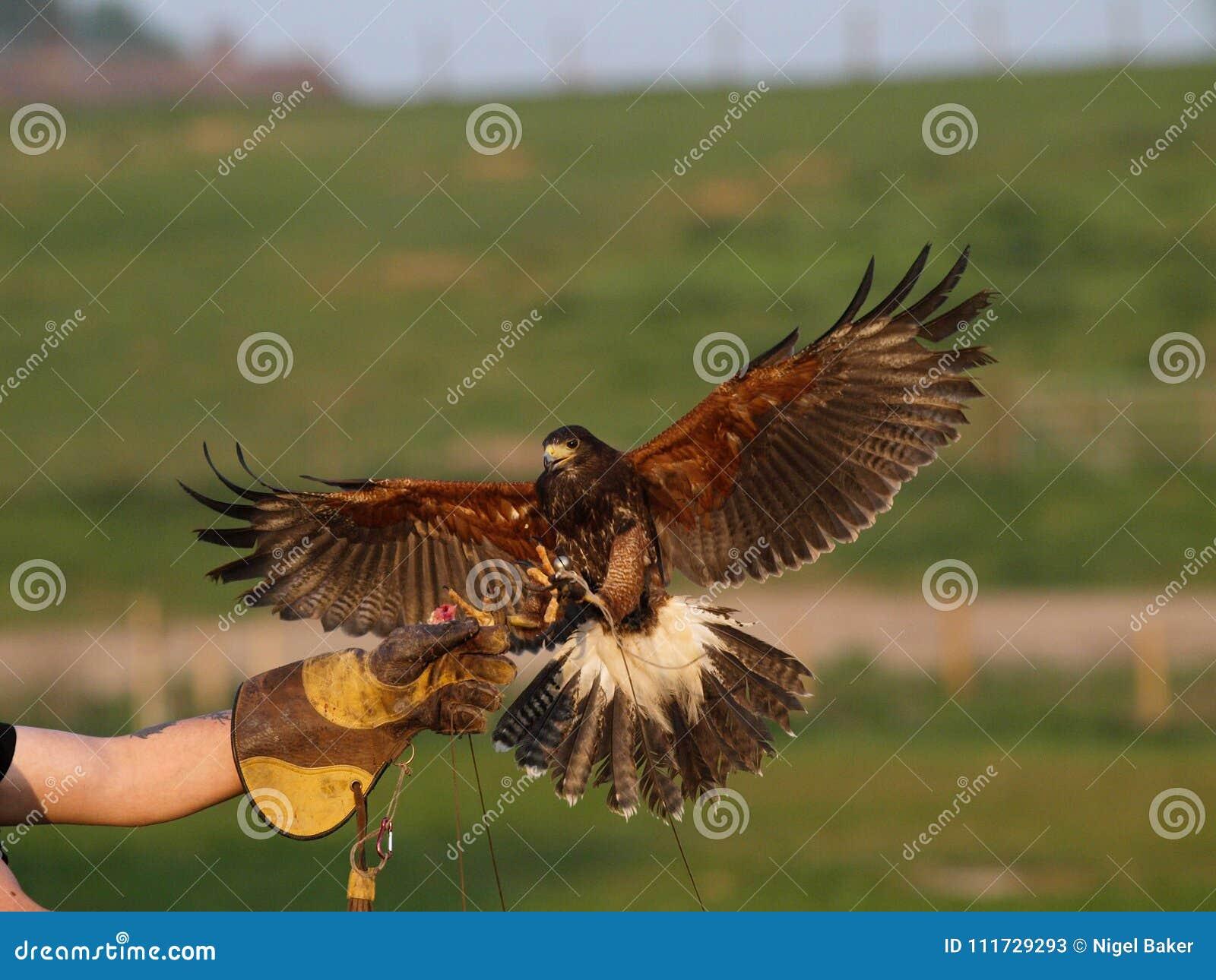 L oiseau de prient