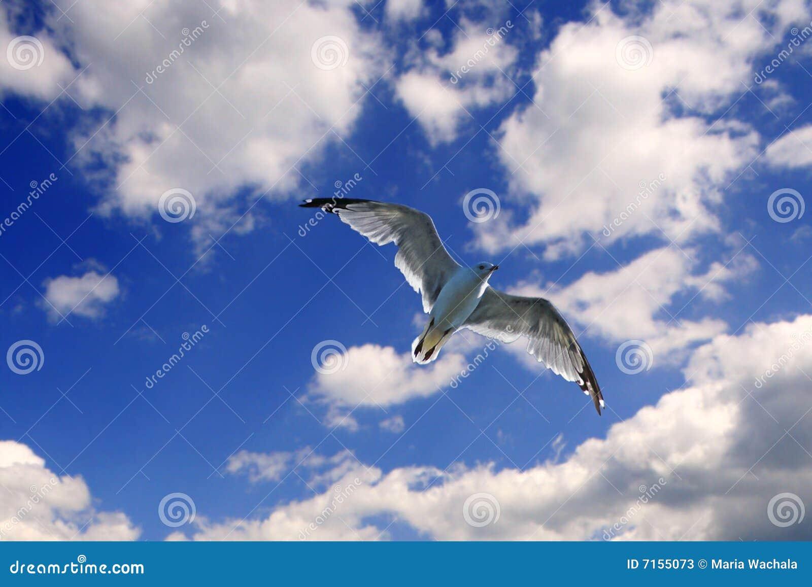 L oiseau libèrent
