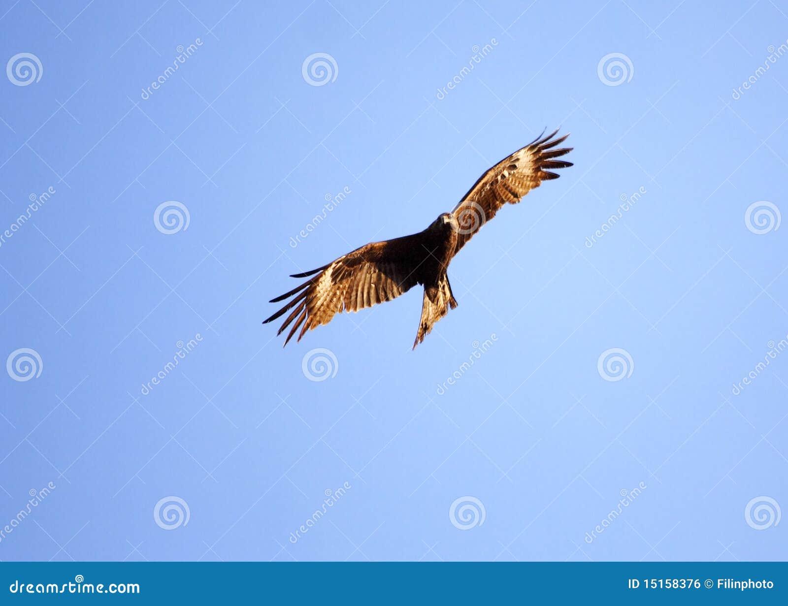 L oiseau montant dans les cieux