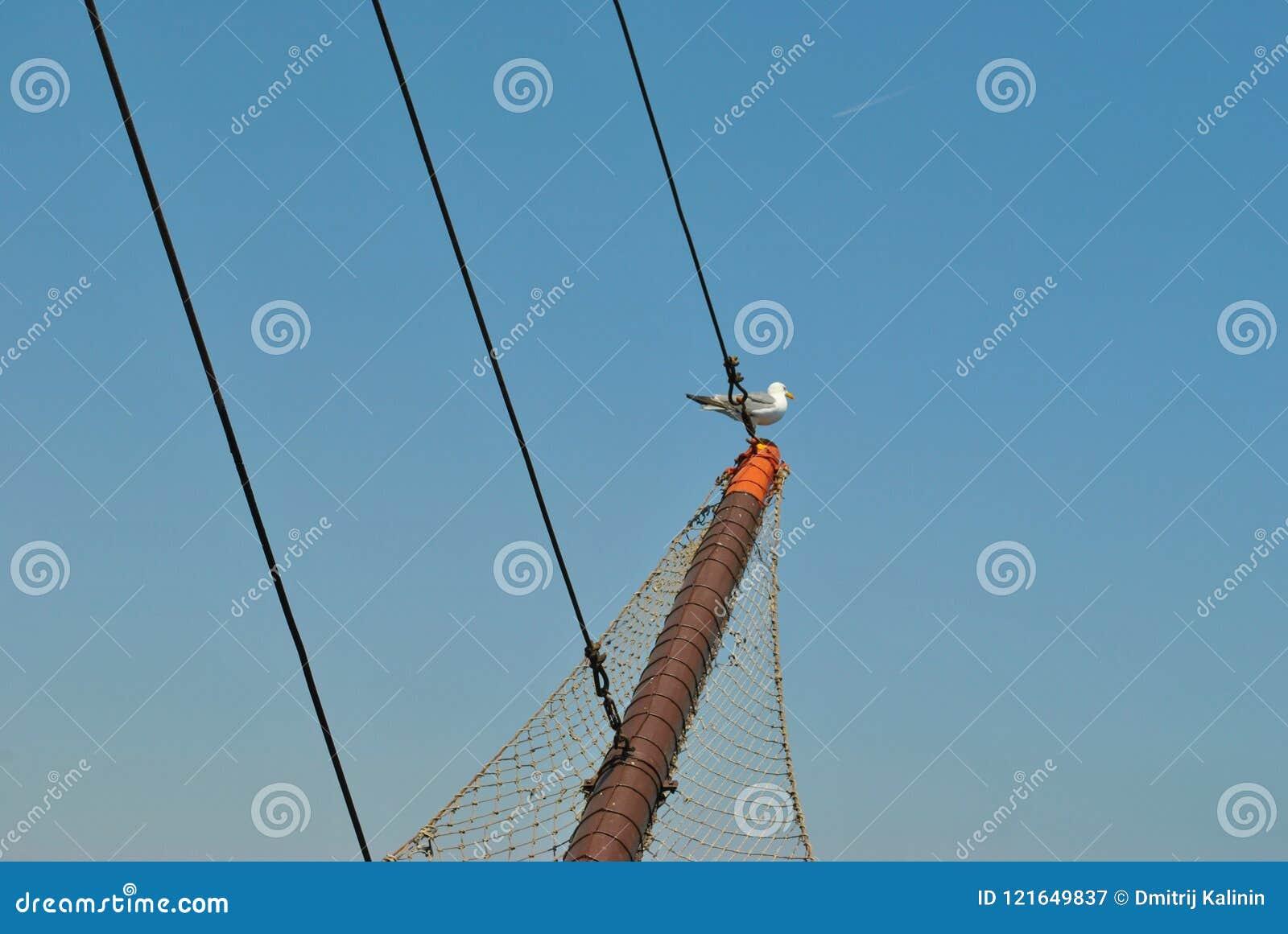 L oiseau sur le bateau