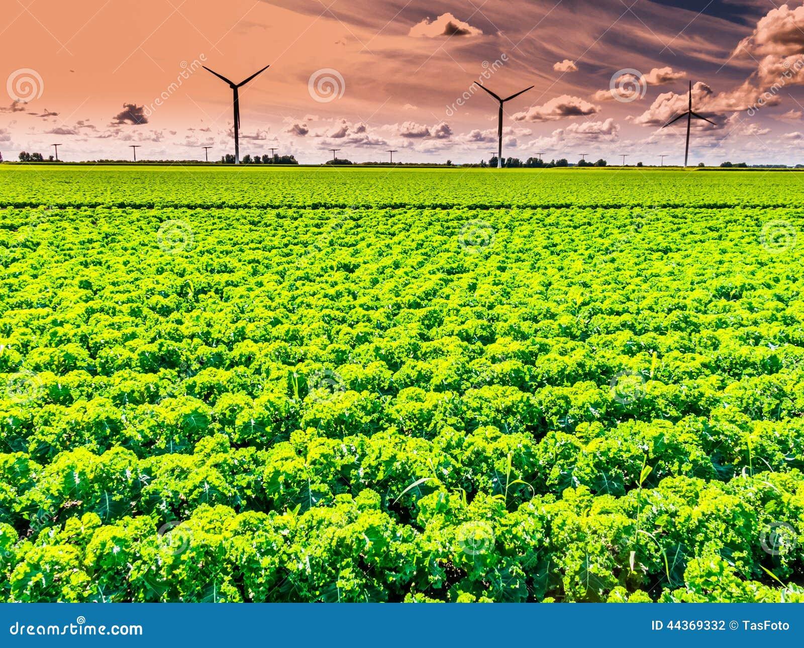 L Olanda - terreno coltivabile e generatori eolici