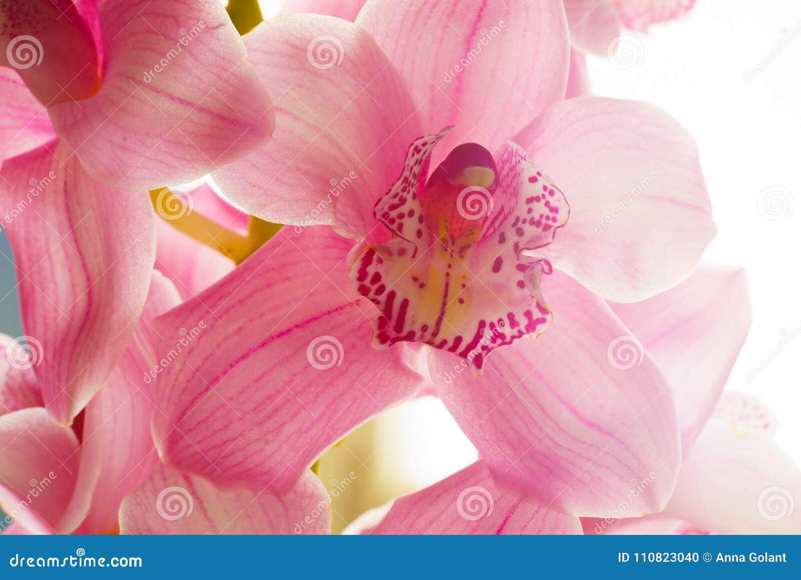L Orchidee Fleurit Le Beau Fond Floral Pour Des Cartes De