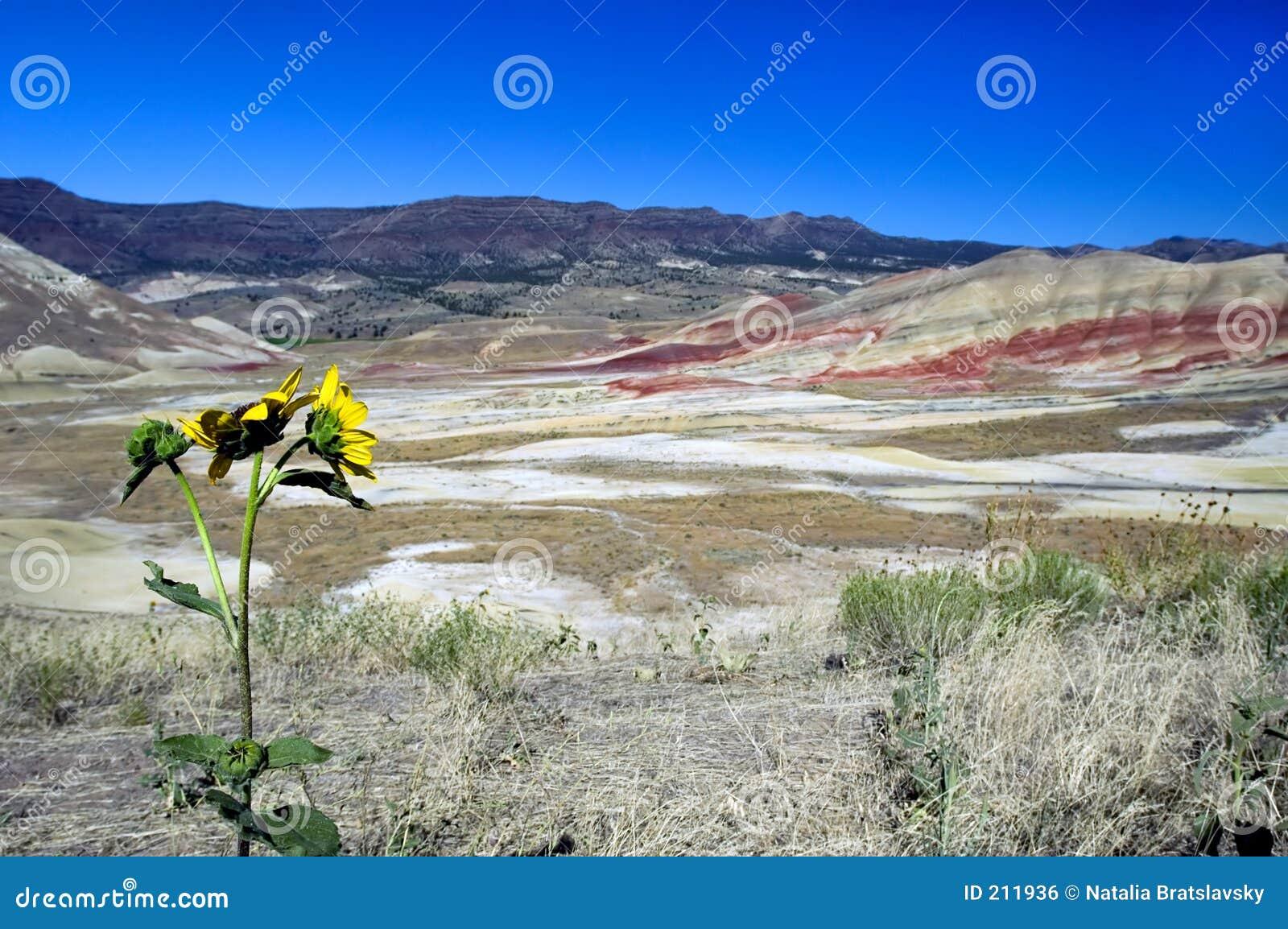 L Oregon ha verniciato le colline