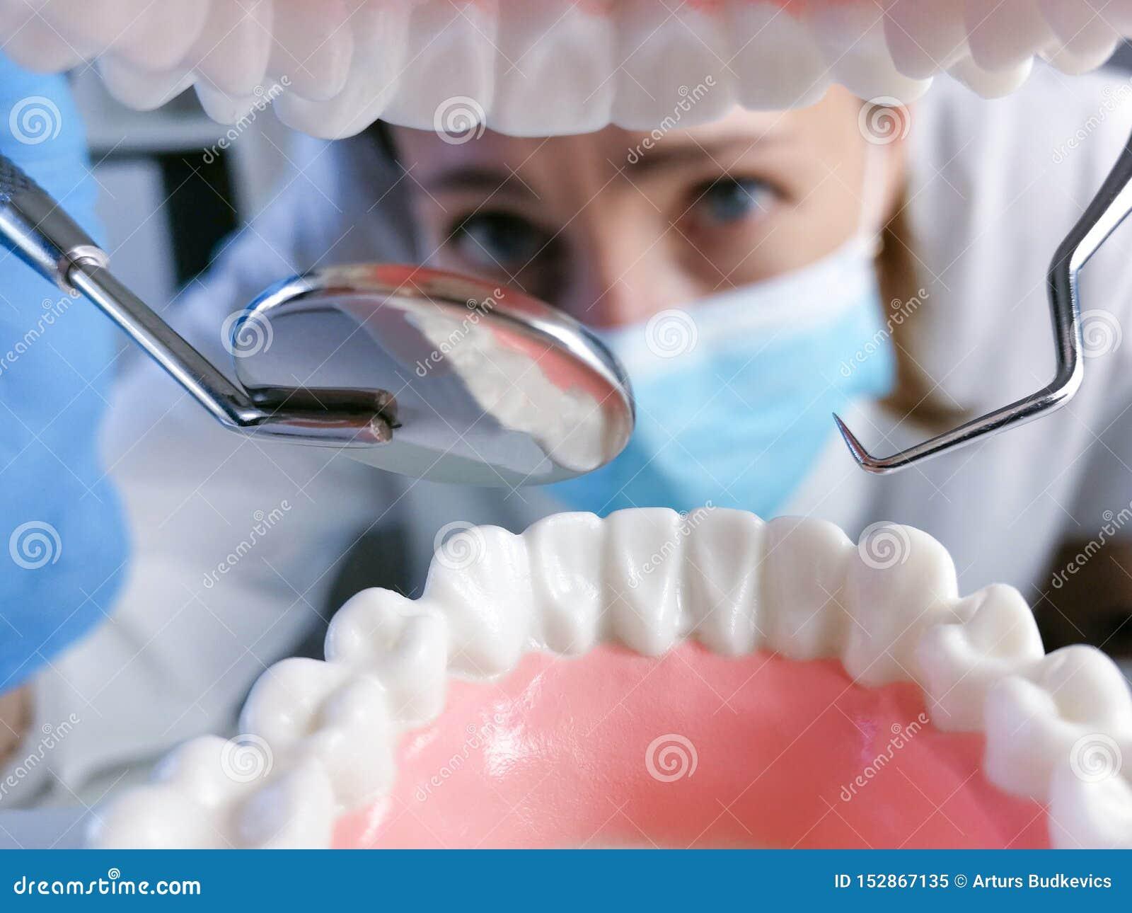 L outil professionnel de stomatologie de participation femelle de dentiste et le pointage aux dents modèlent concept dentaire d h
