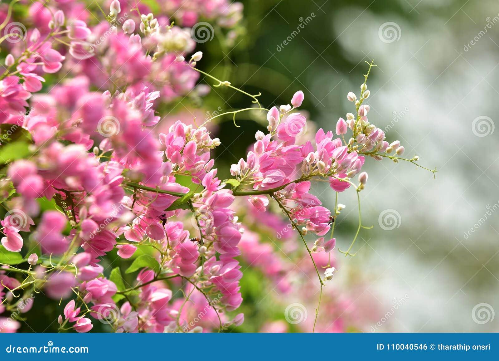 L Roze bloembloesem op zijn boom in de lente